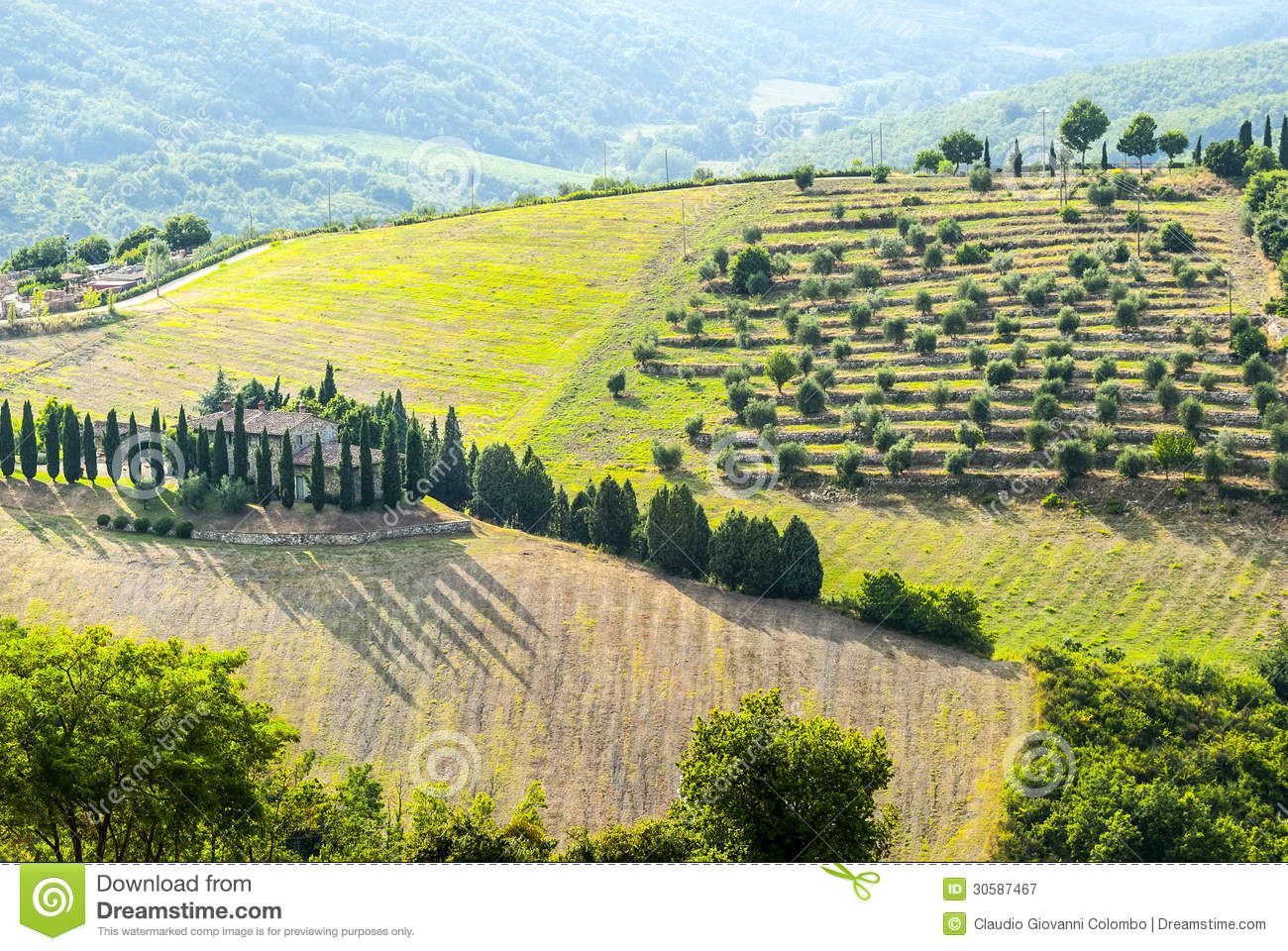 Chianti landscape near radda with cypresses and olive for Nearby landscapers