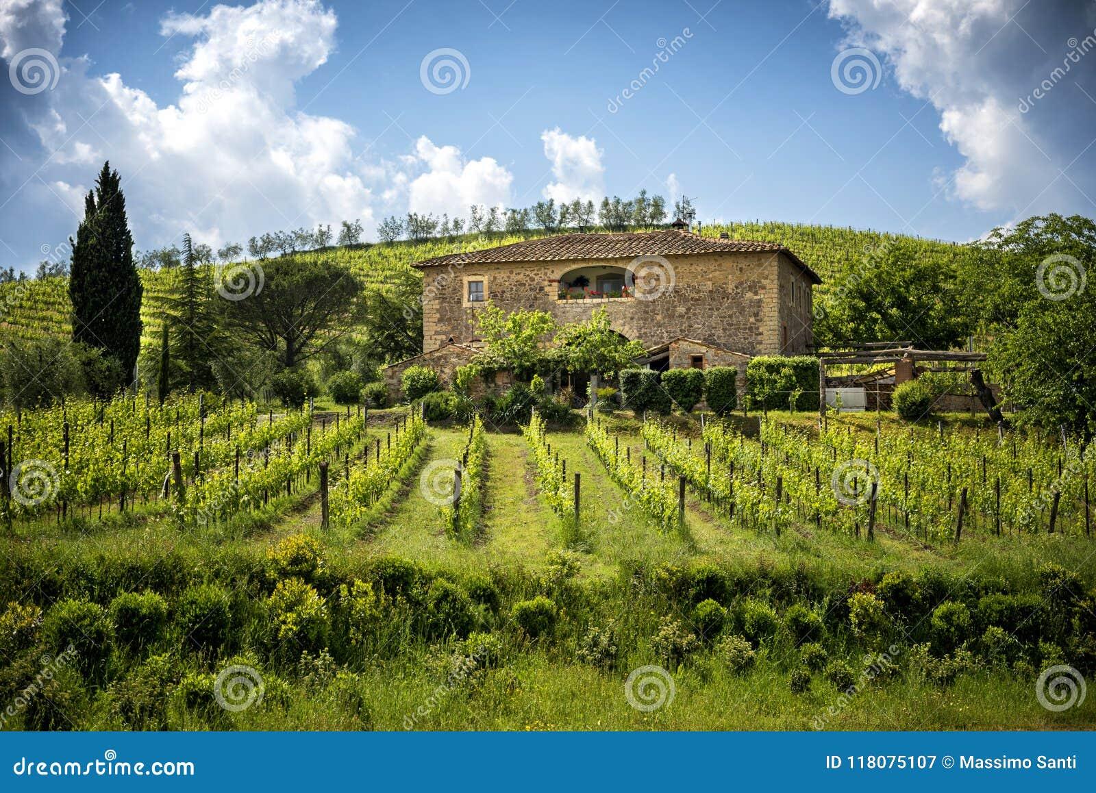 Chianti vineyards in Tuscany, Italy.