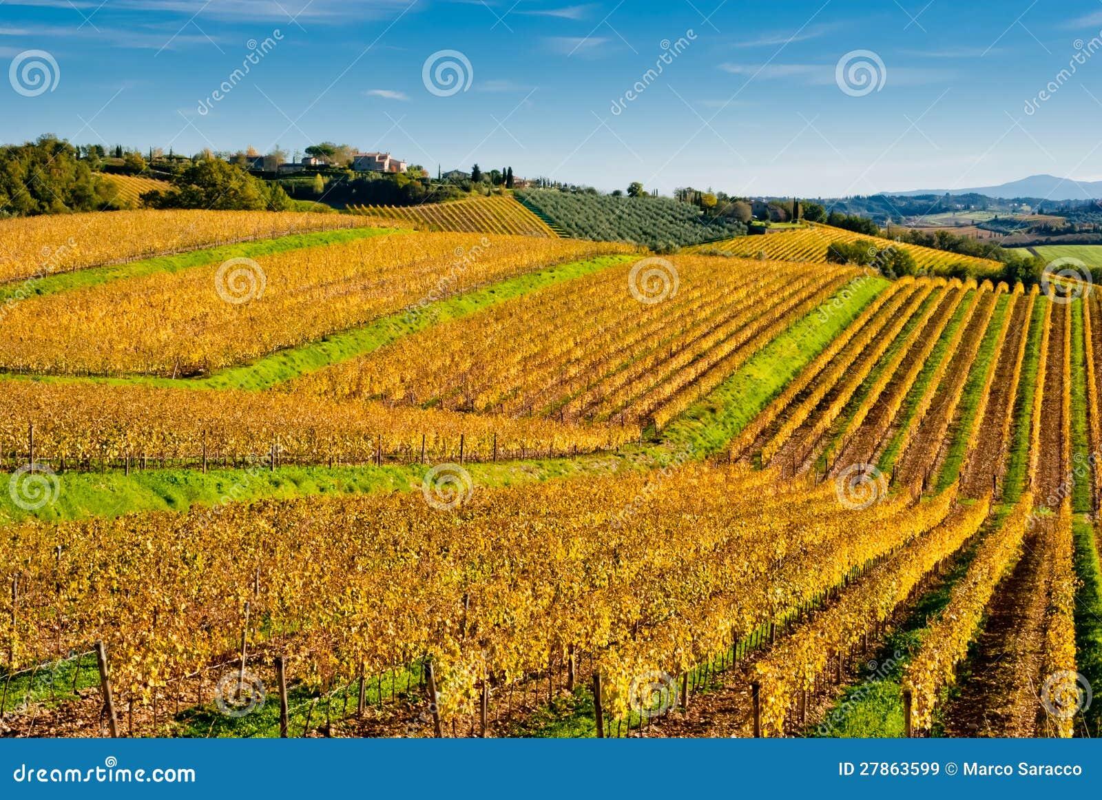 Chianti wina regionu winnicy, Tuscany
