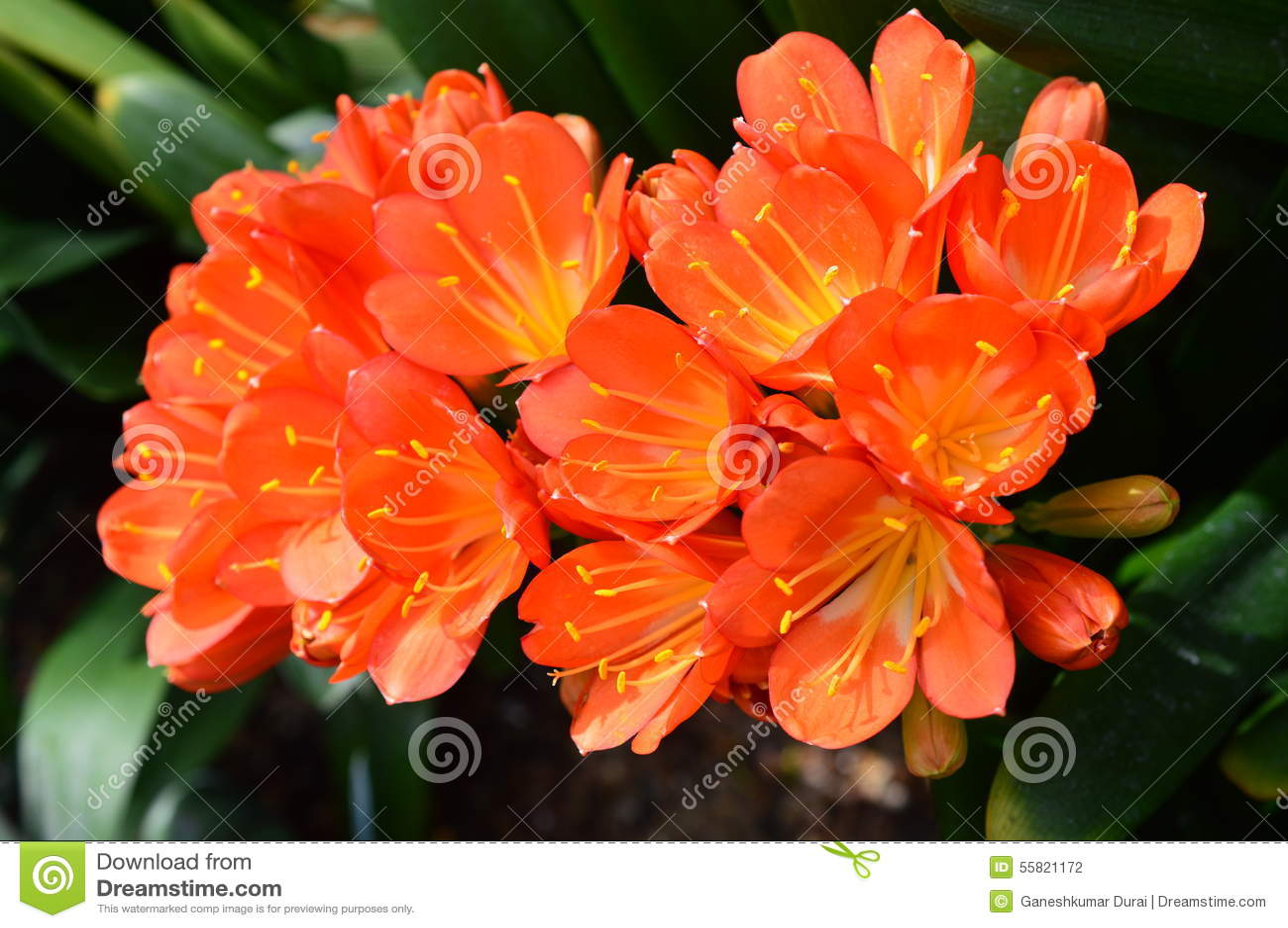 Chicago Botanic Garden Orchid Show