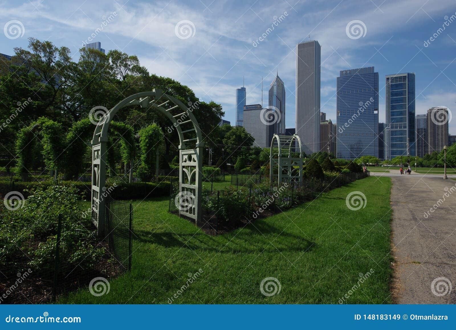 Chicagowski Grant miasta i parka linia horyzontu
