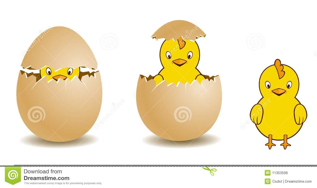 chick and egg stock vector illustration of illustration