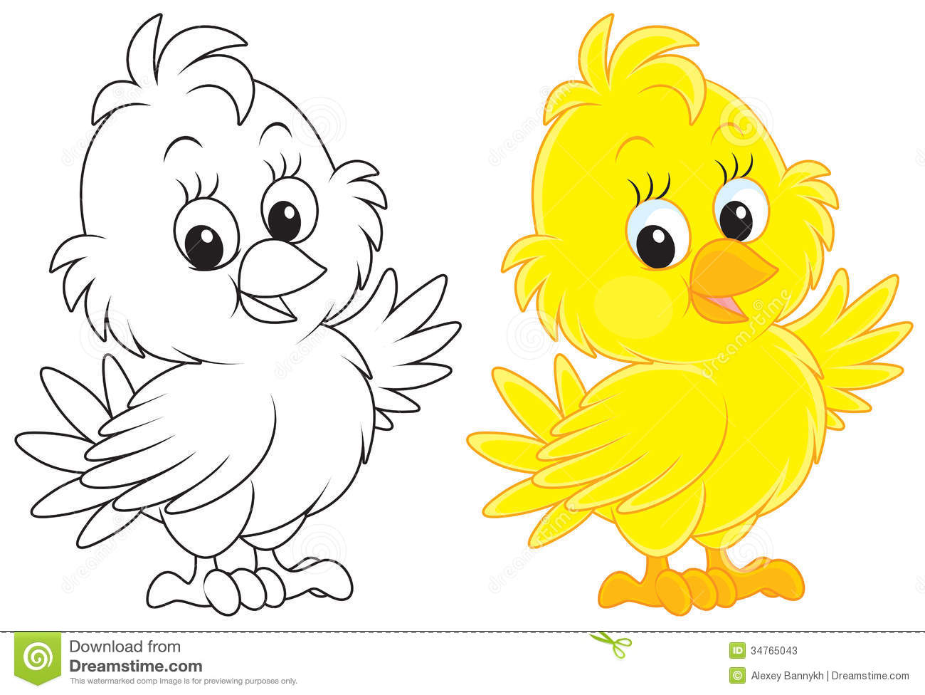 Little yellow chick, color and black-and-white outline illustrations ...