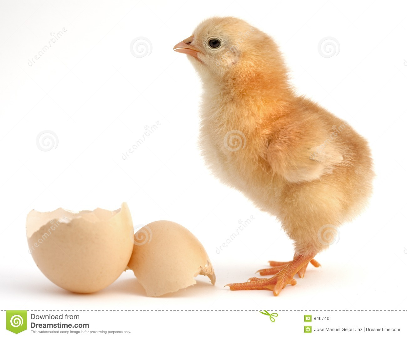 Chick new born