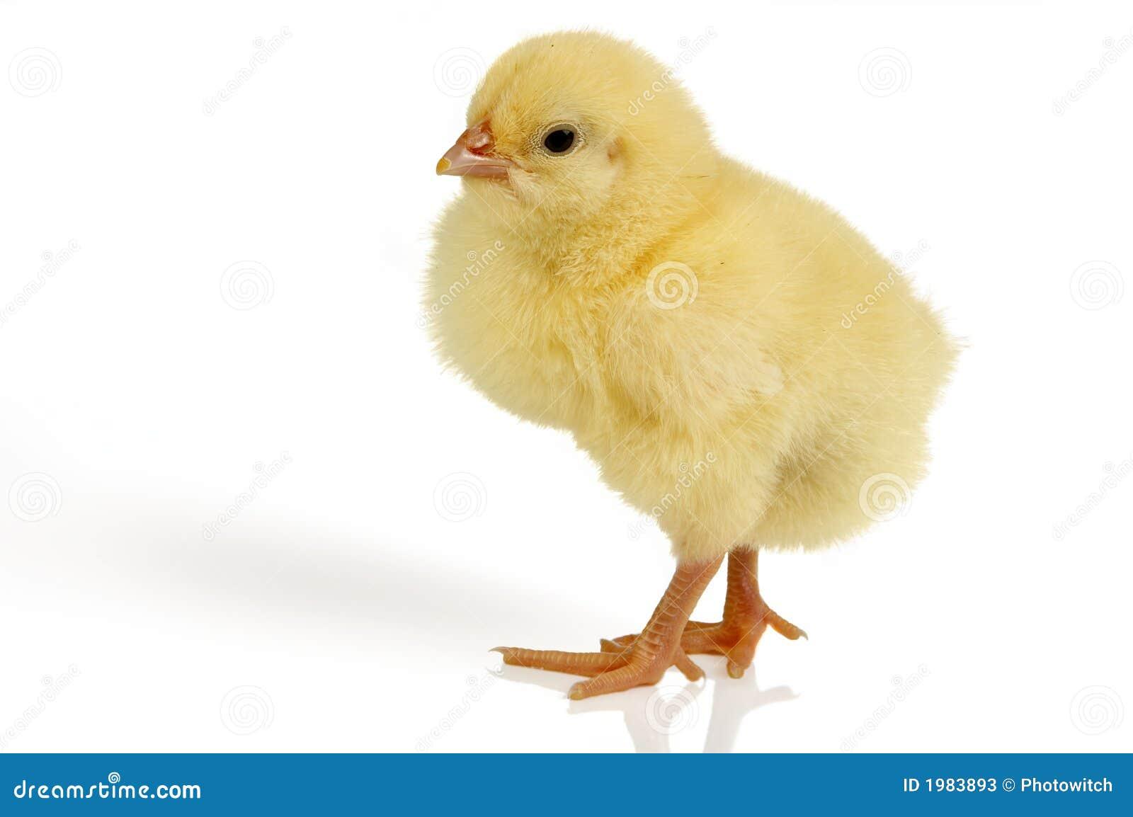 Chick Wielkanoc przeszłość
