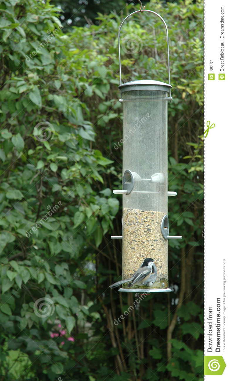 Chickadee all alimentatore dell uccello
