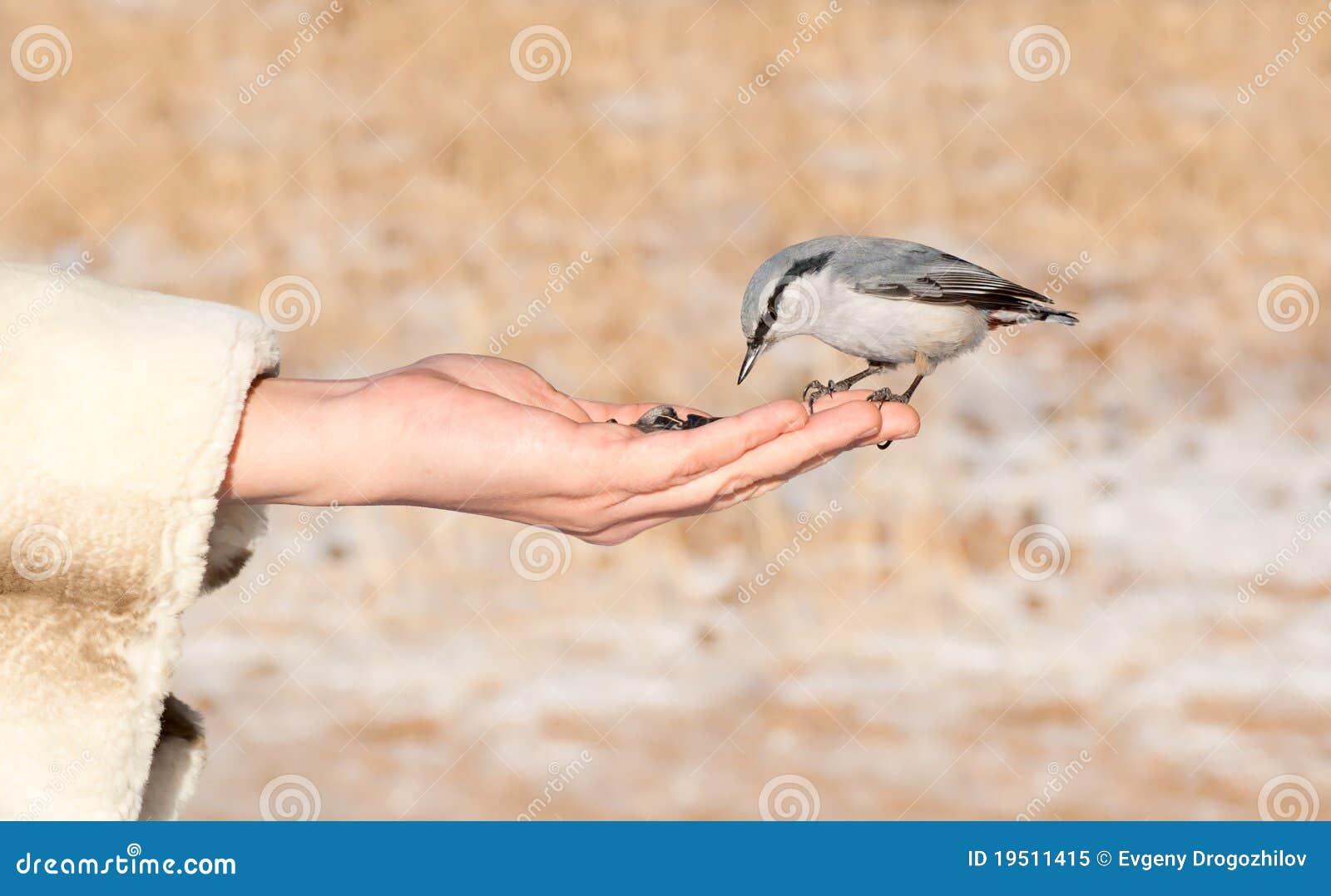 Chickadee landing - photo#20