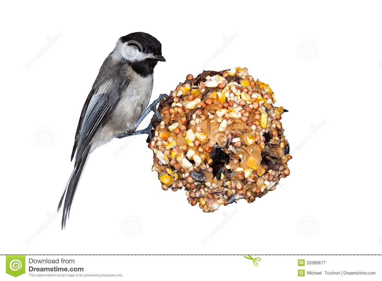 Chickadee, Pine Cone & Peanut Butter Royalty Free Stock Photography ...