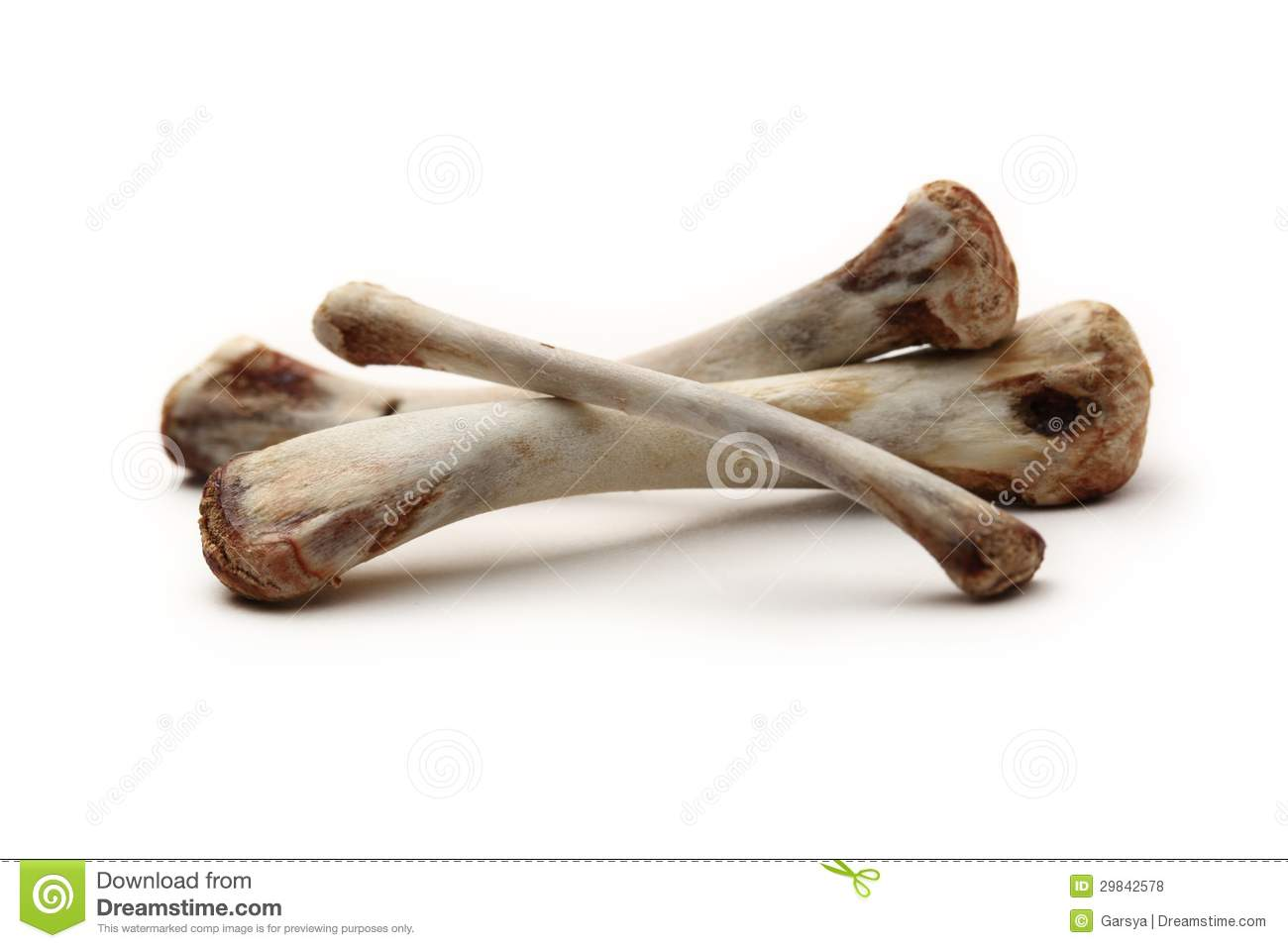 Chicken Bones Stock Photo  Image Of Bird  Remnant  Garbage