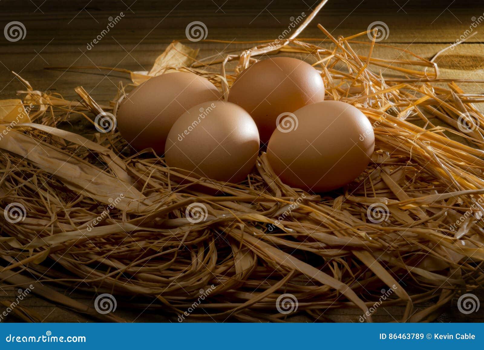 Chicken brown eggs in nest