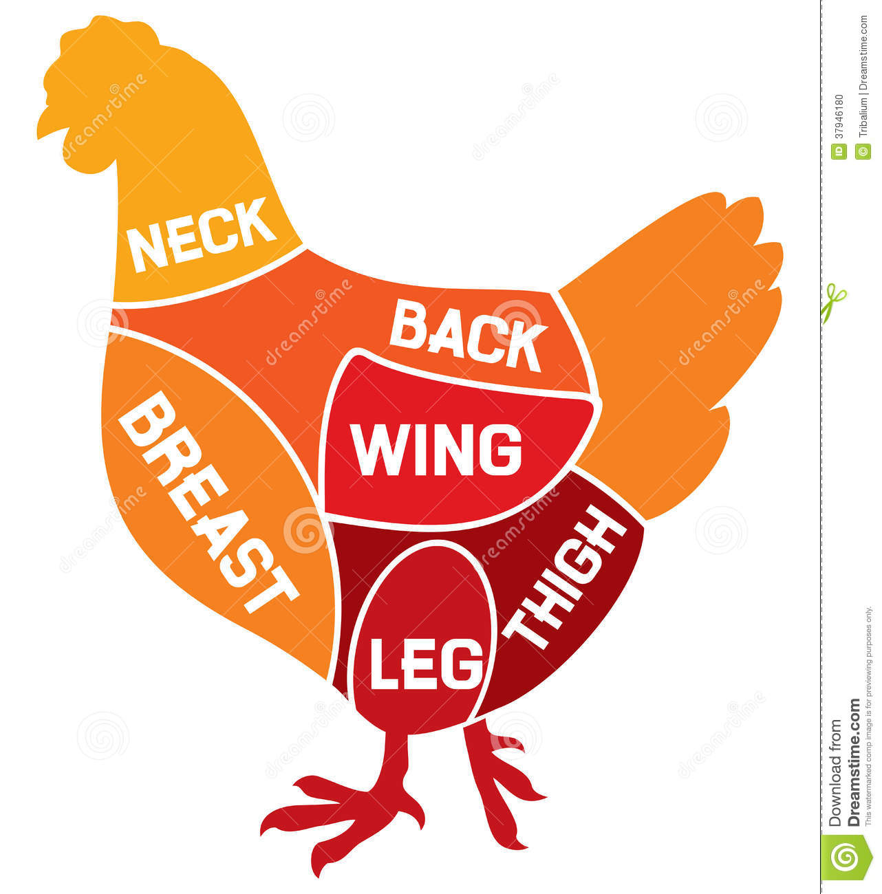 Chicken Wing Diagram Images Pictures Becuo
