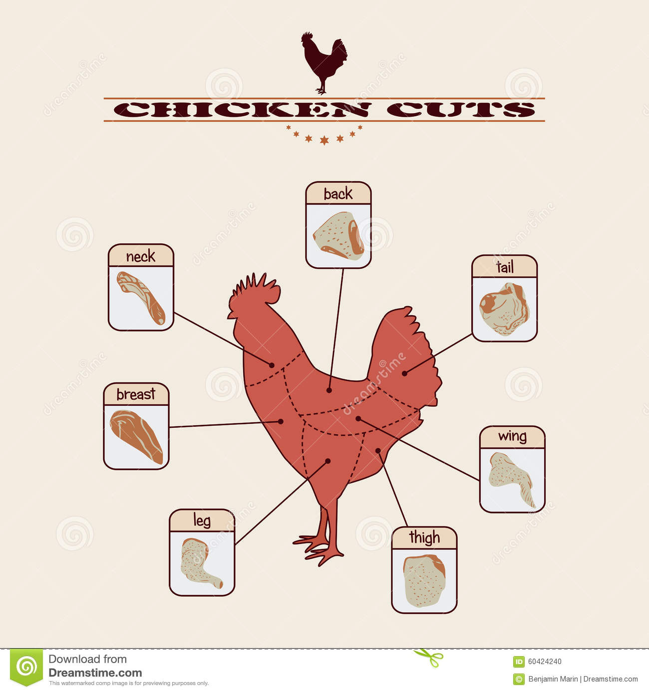 Chicken Cuts Stock Vector Illustration Of Parts Back 60424240 Diagram Royalty Free