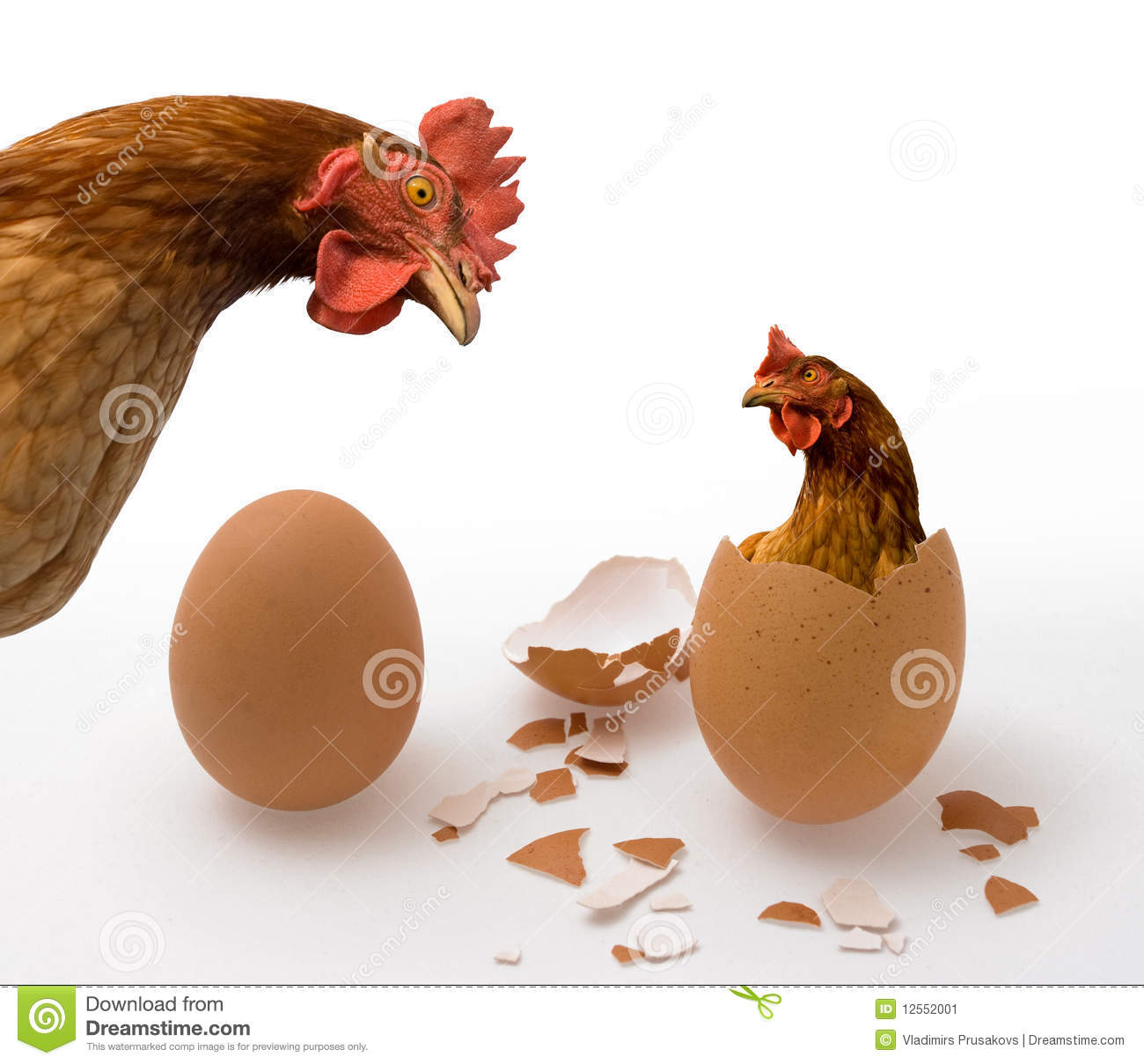Chicken or Egg on White, Philosophy Question, Who Was the First
