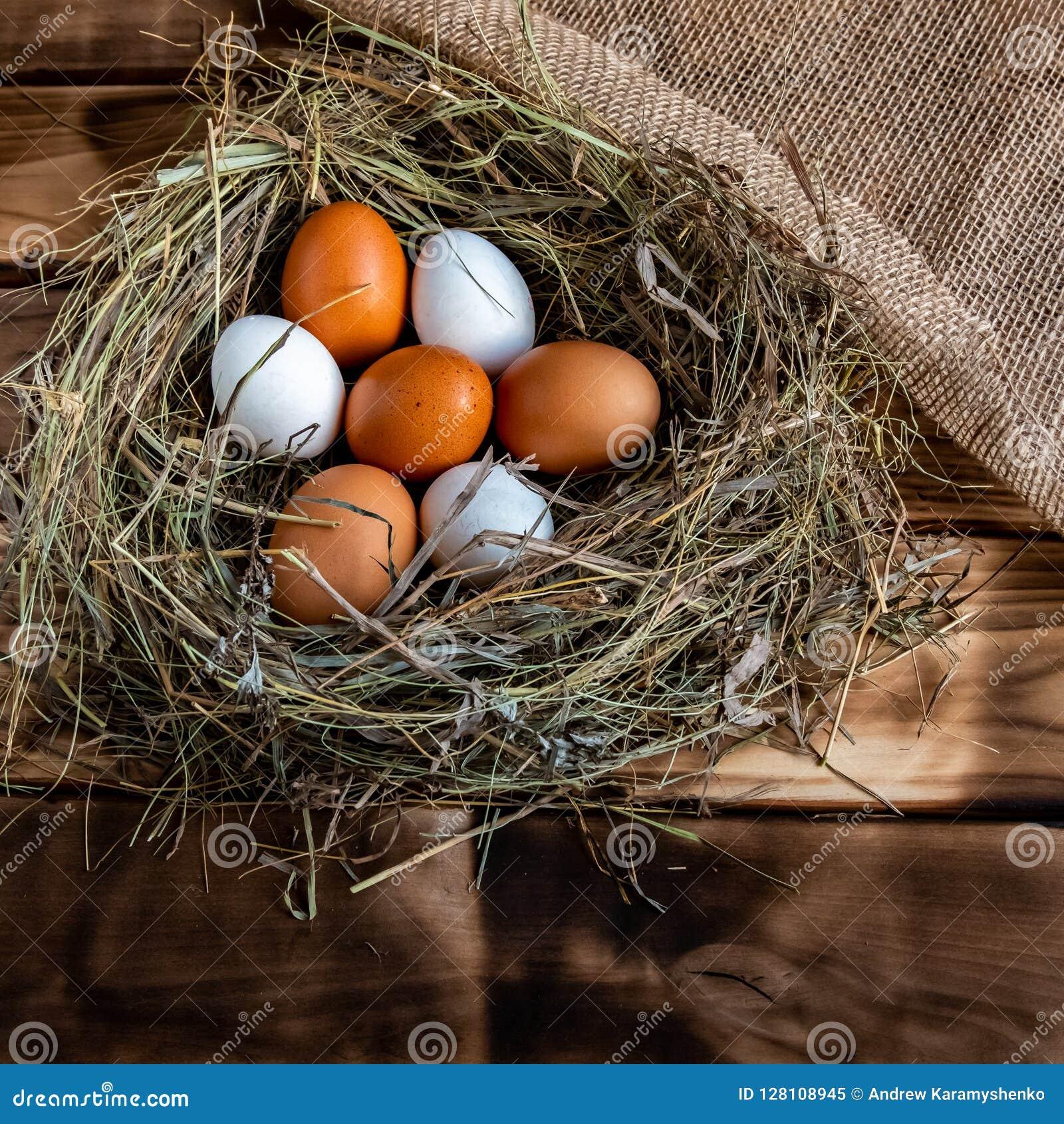 Chicken egg in the nest