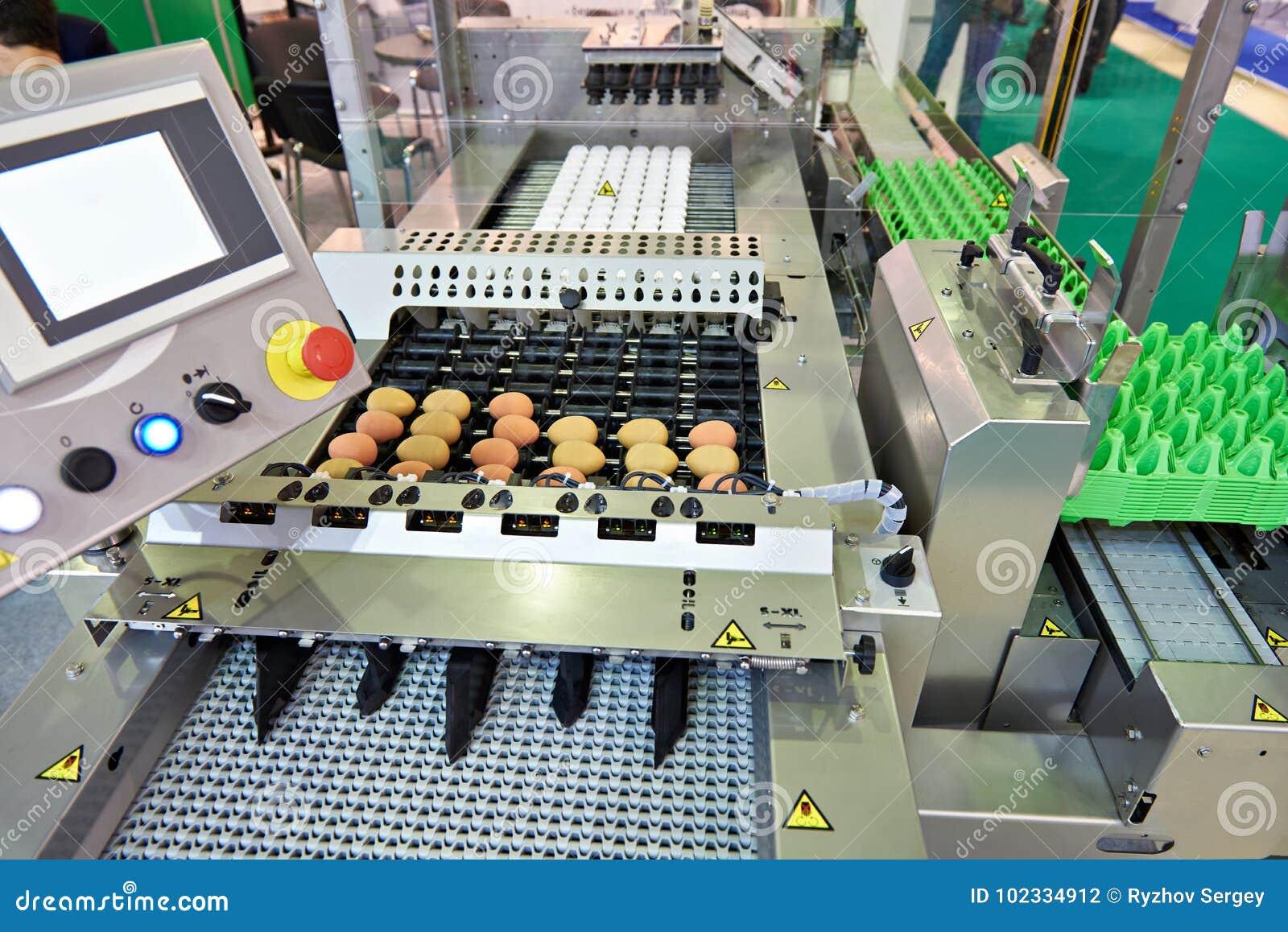 Chicken eggs on conveyor belt at food factory