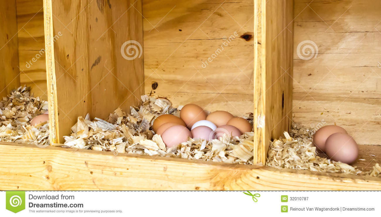 Chicken Eggs Royalty Free Stock Photography Image 32010787