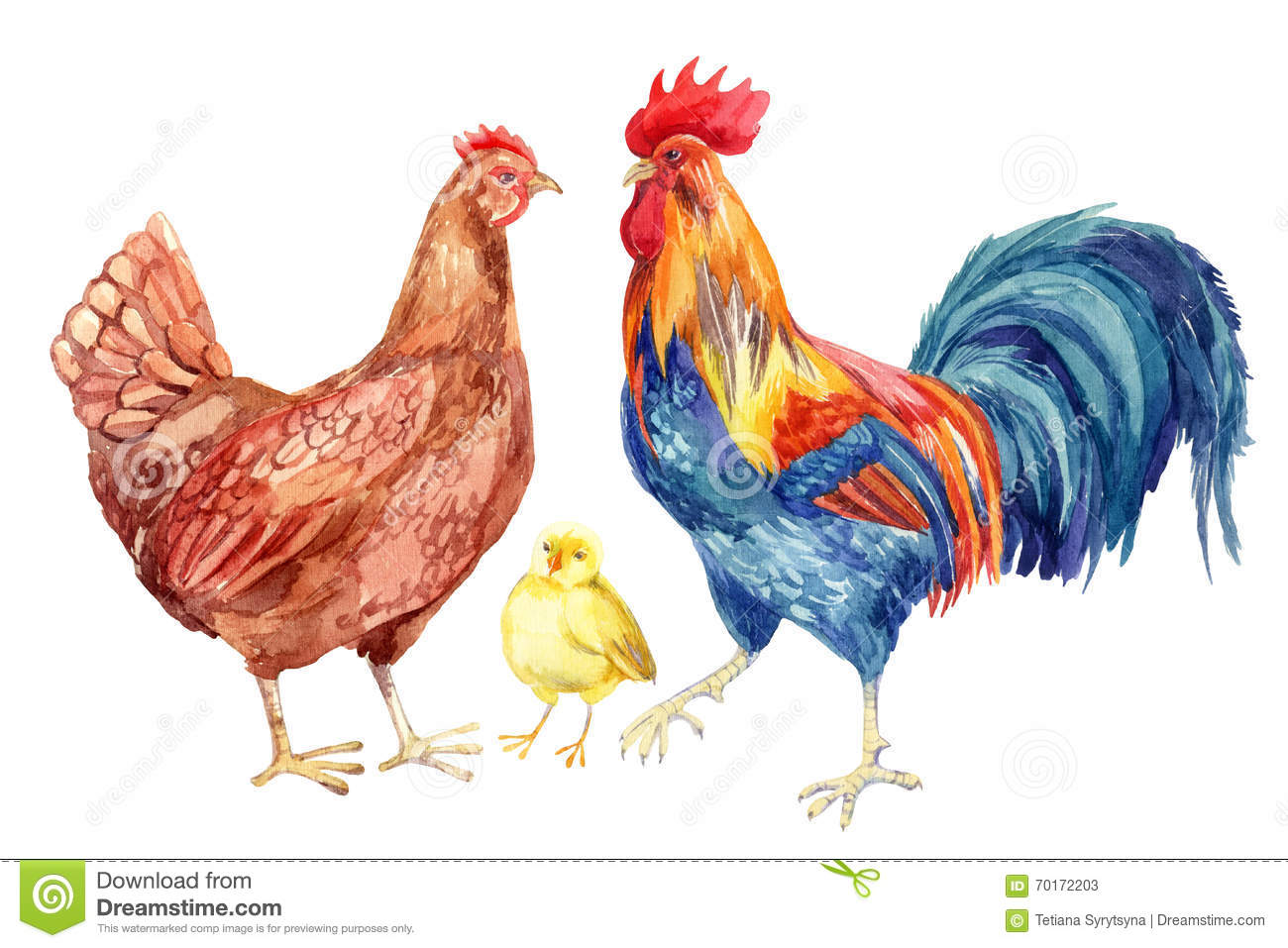 Painted Rooster Pictures