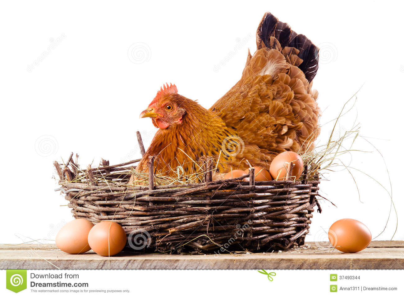 Chicken Nest Cartoon Cartoondealer