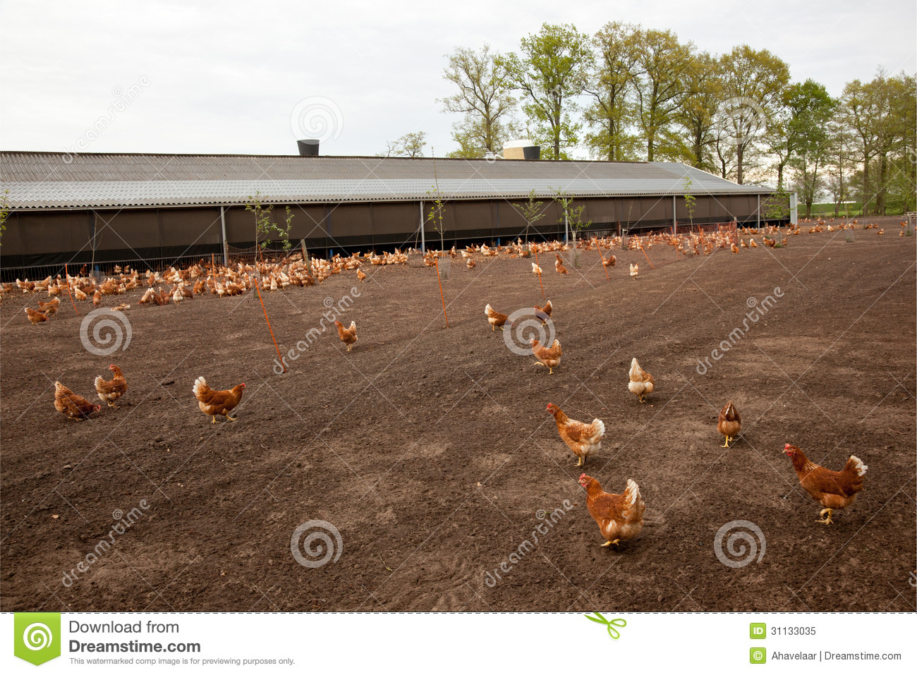 small poultry farm business plan
