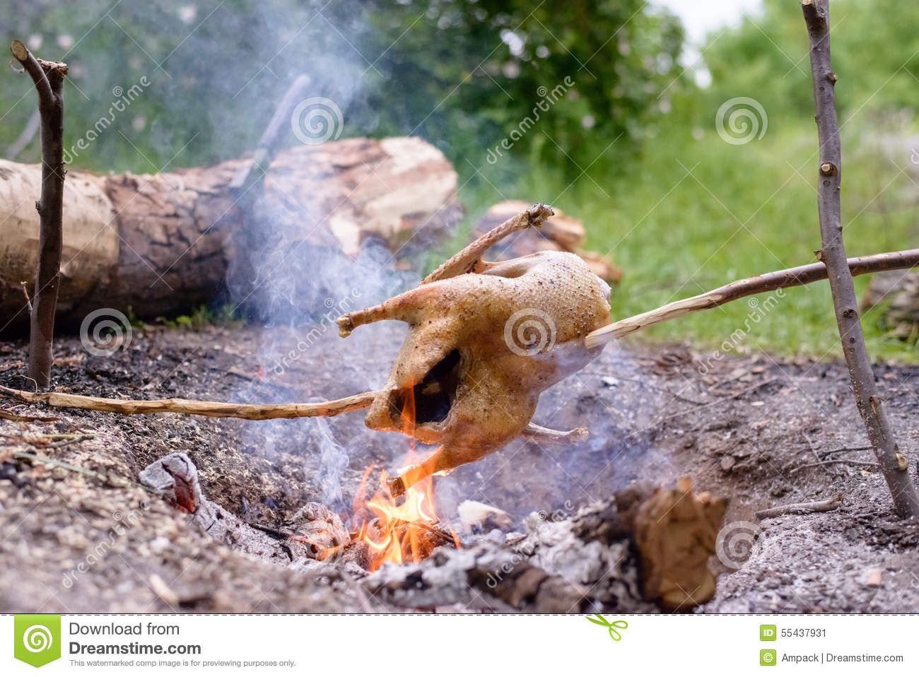 chicken roasting over open camp fire stock image image of