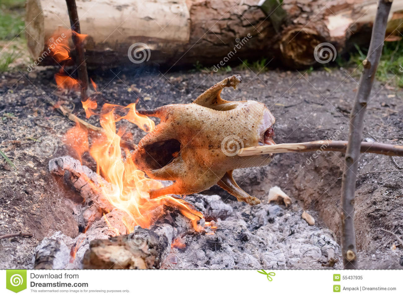chicken roasting over open camp fire stock image image of healthy