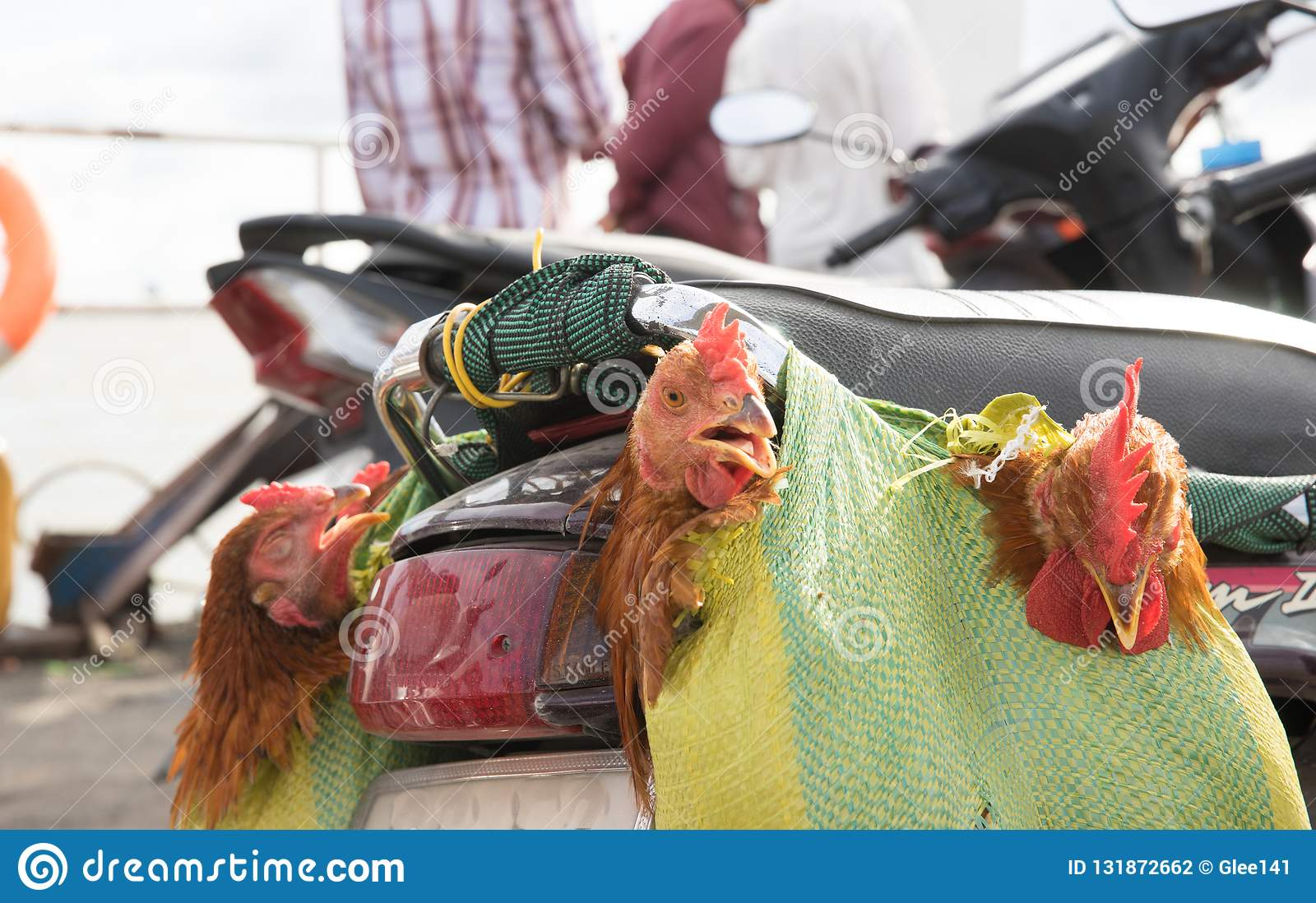 Chicken souvenirs on ferry to Saigon