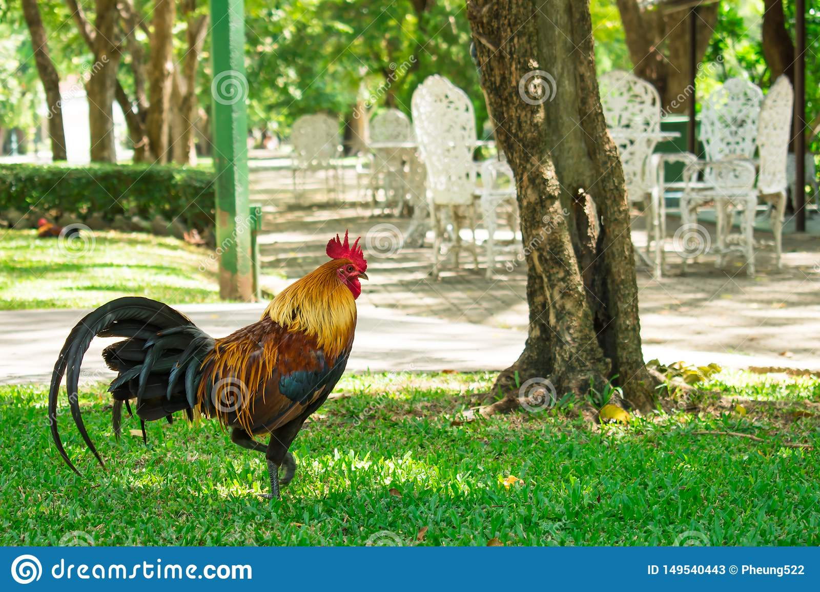 Chickens walking in the park.Natural background.