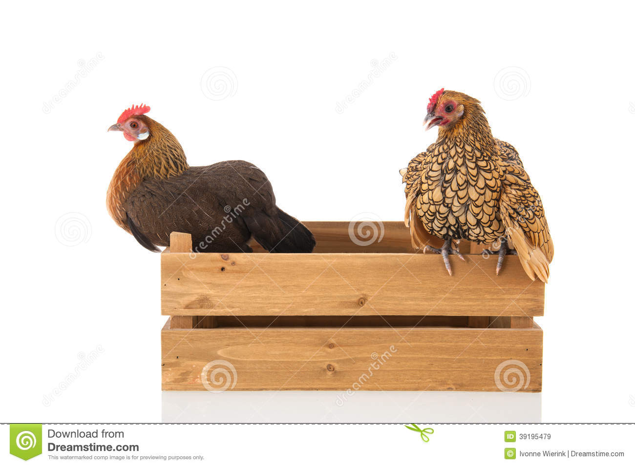 Chickens on wooden crate stock photo image 39195479 for Wooden chicken crate plans