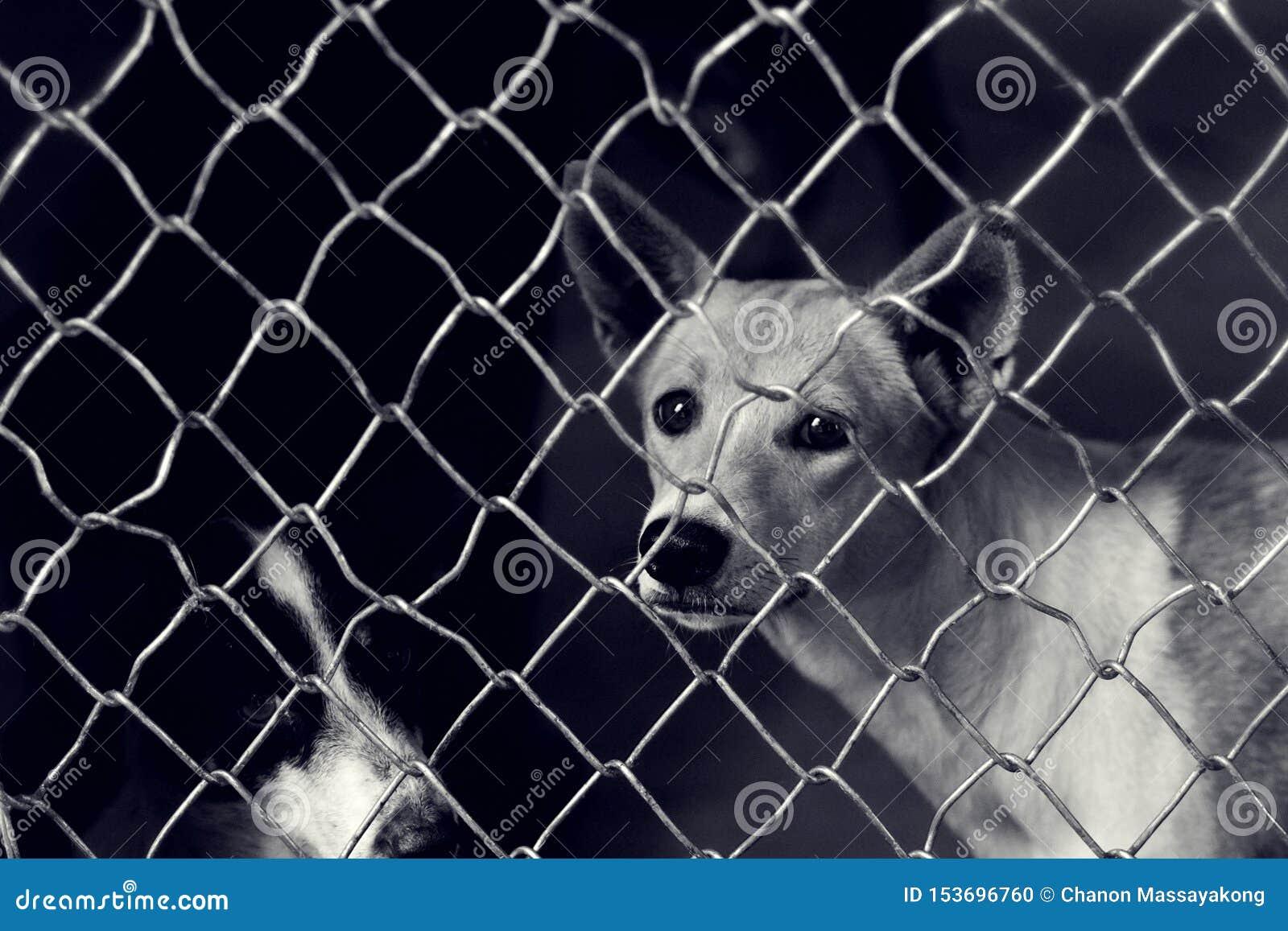 Chien égaré malheureux dans une cage