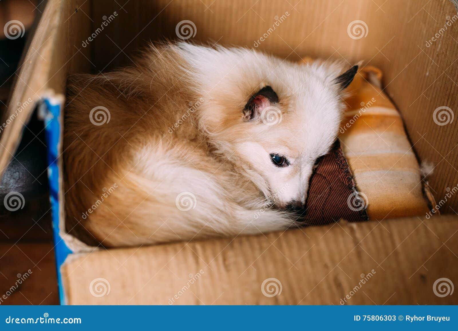 Chien adulte rouge blanc de race m lang par b tard de petite taille avec des - Tonnelle petite taille ...