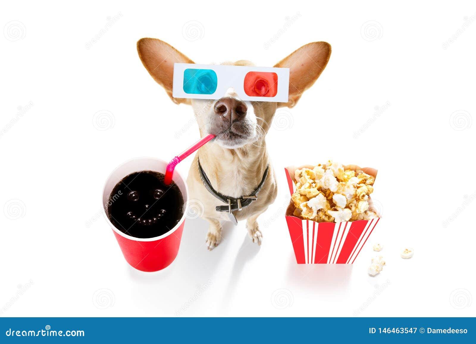 Chien Aux Films Photo stock Image: 39808309 | Chien, Photo