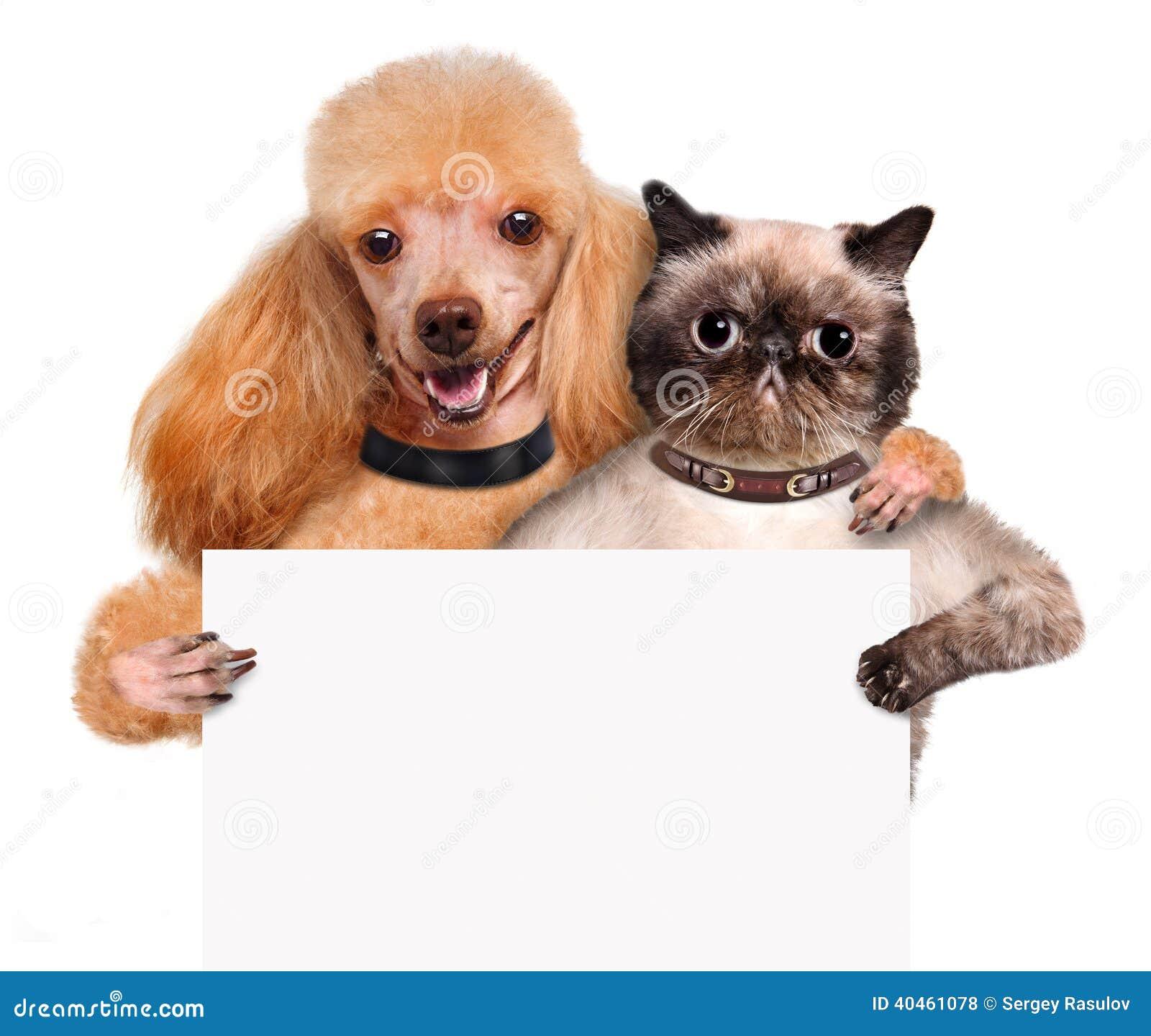 Chien avec un chat se tenant dans sa bannière de blanc de pattes.
