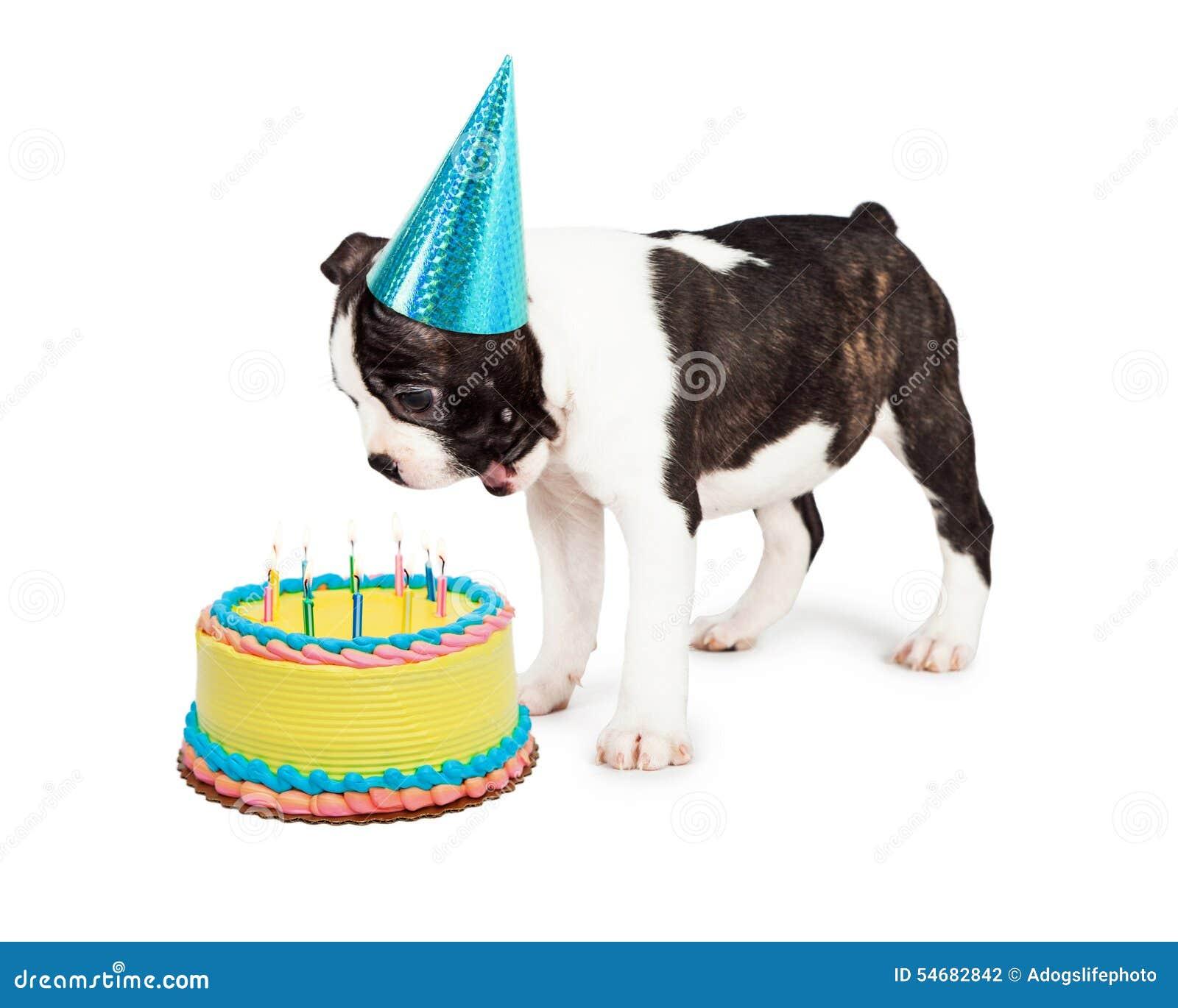 Chien d anniversaire soufflant des bougies