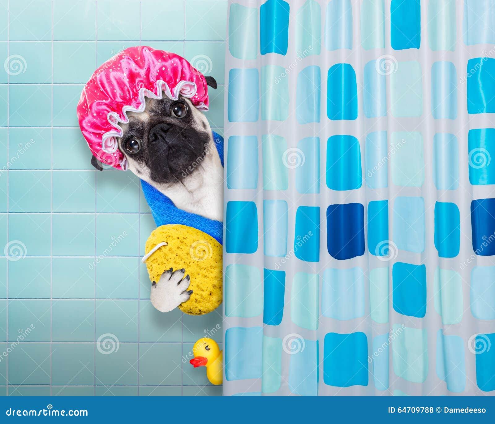 Chien dans la douche