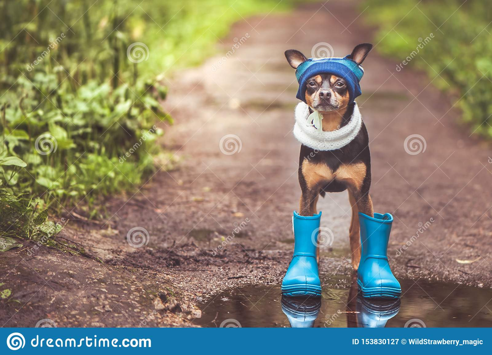 Chien dans un chapeau et des bottes en caoutchouc se tenant dans un magma sur un chemin forestier, le thème du temps pluvieux, l
