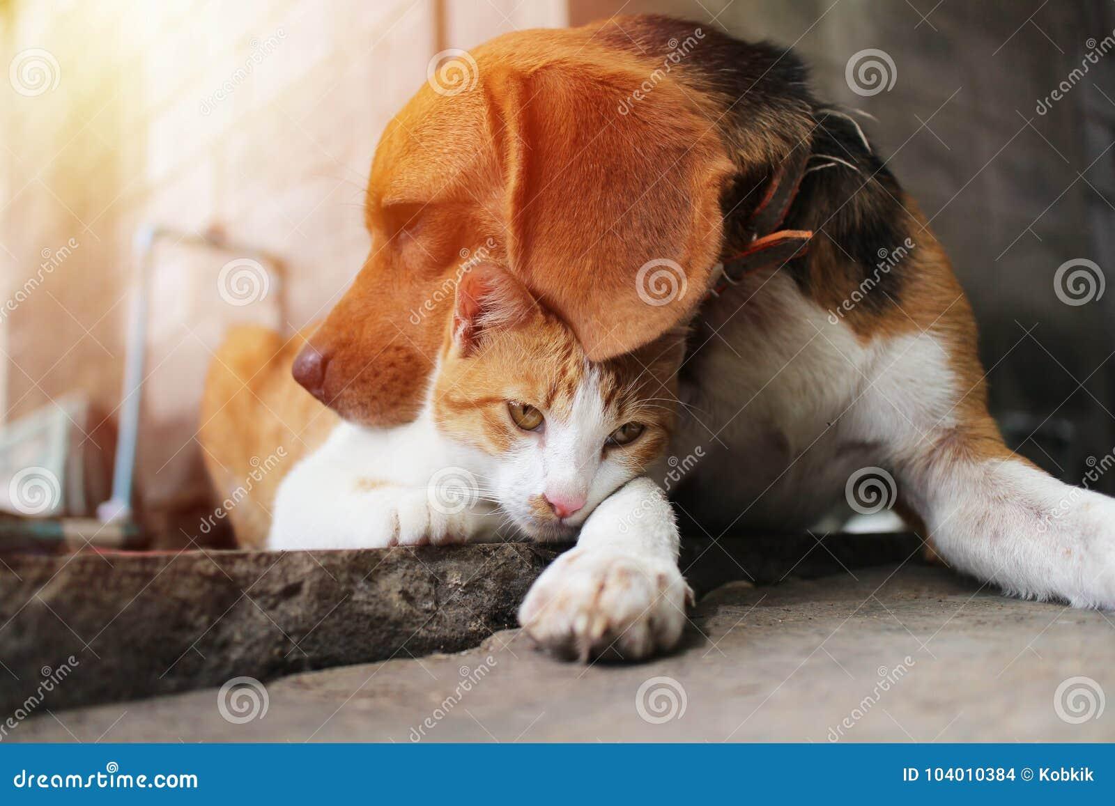 Chien de briquet et chat brun