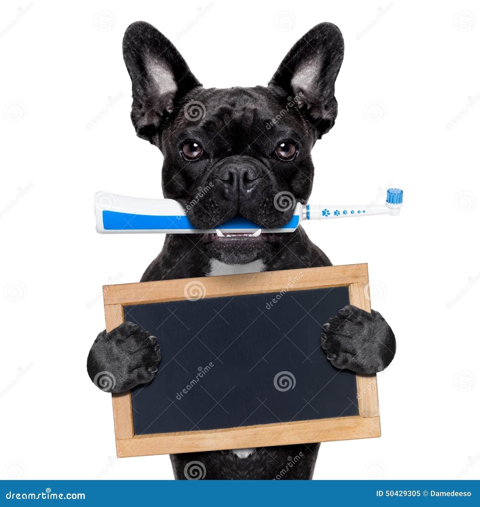 Chien de brosse dents lectrique photo stock image - Brosse a chien ...