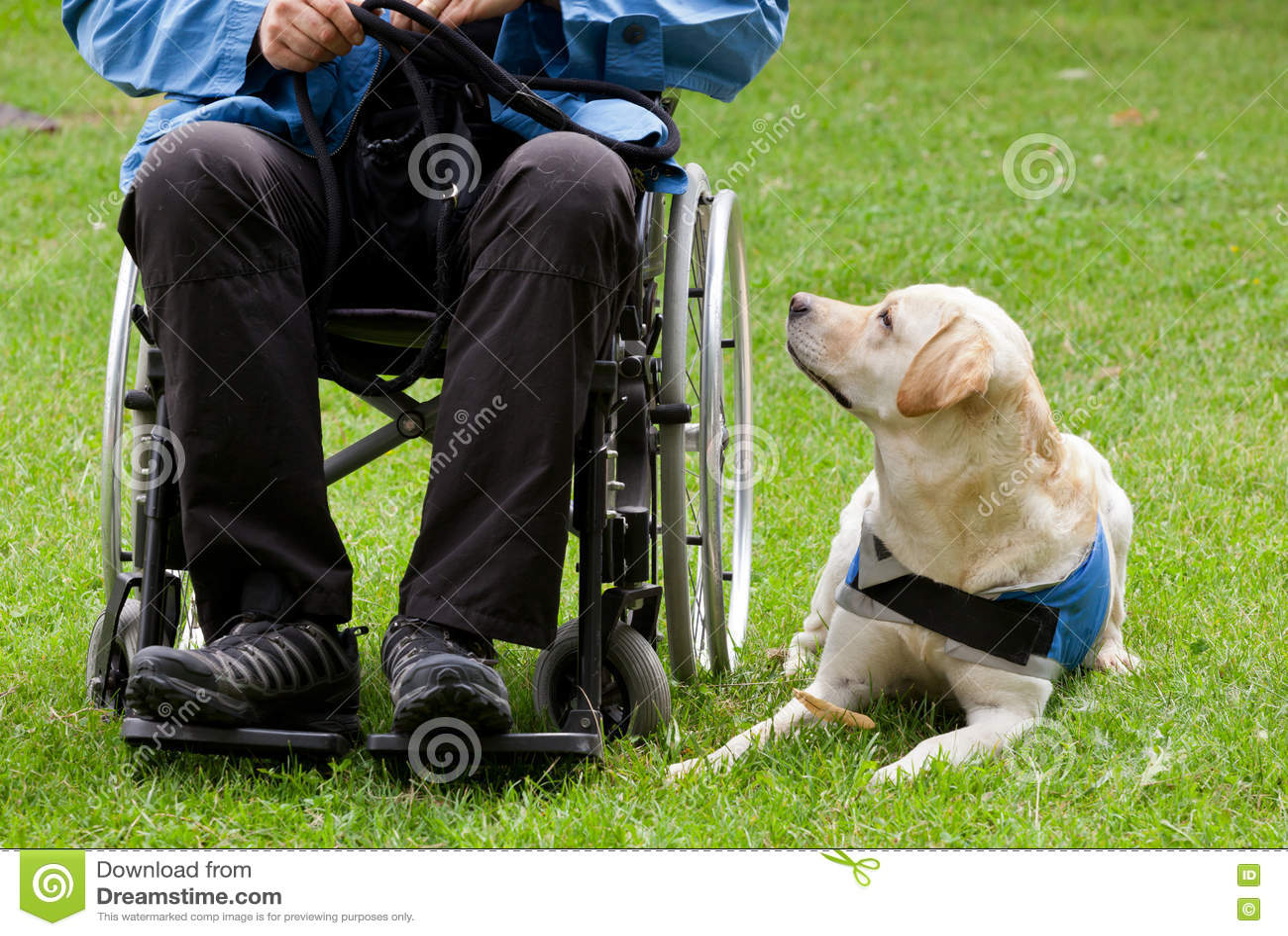 Chien de guide de Labrador et son propriétaire handicapé