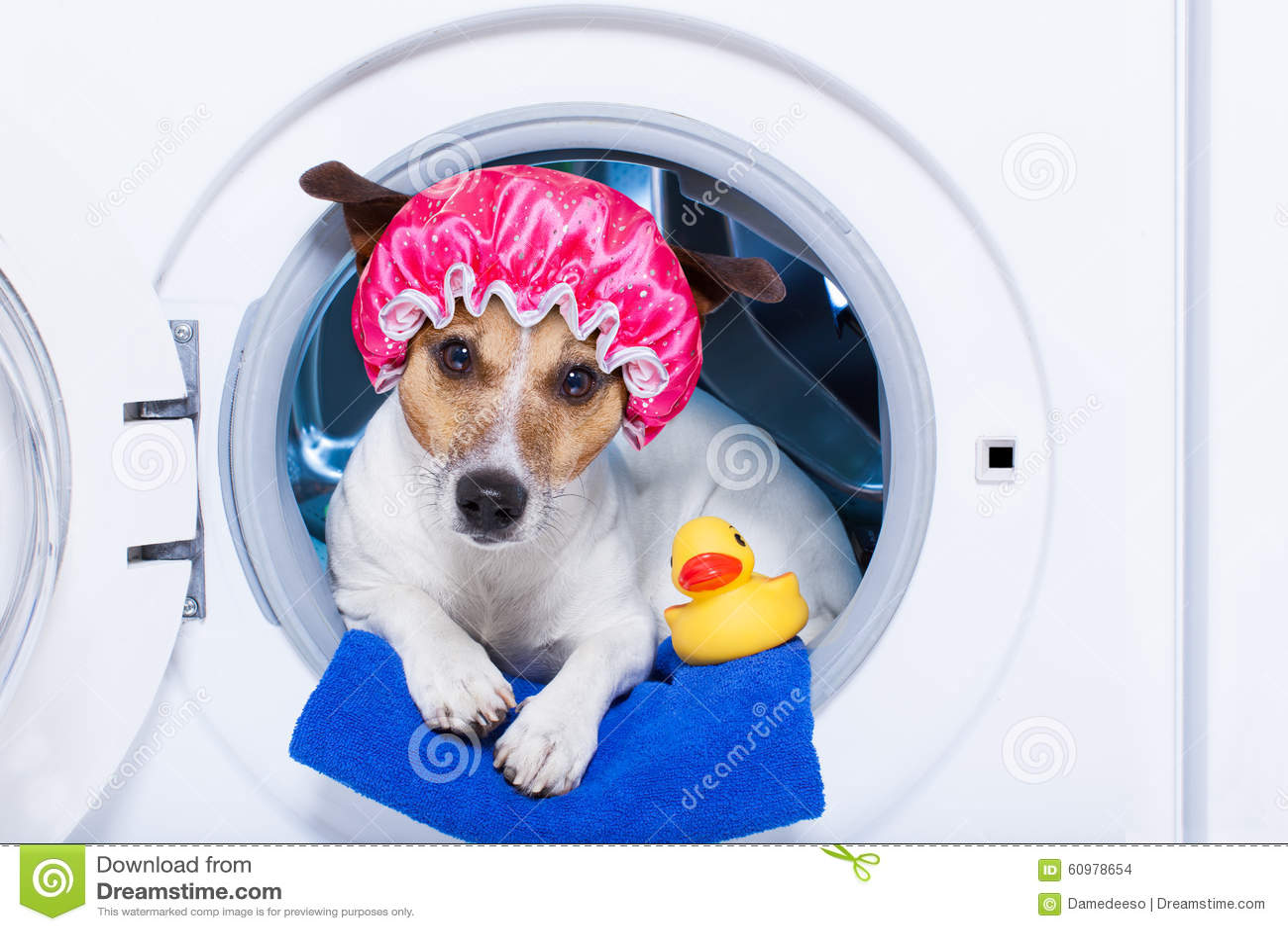 Chien de lavage