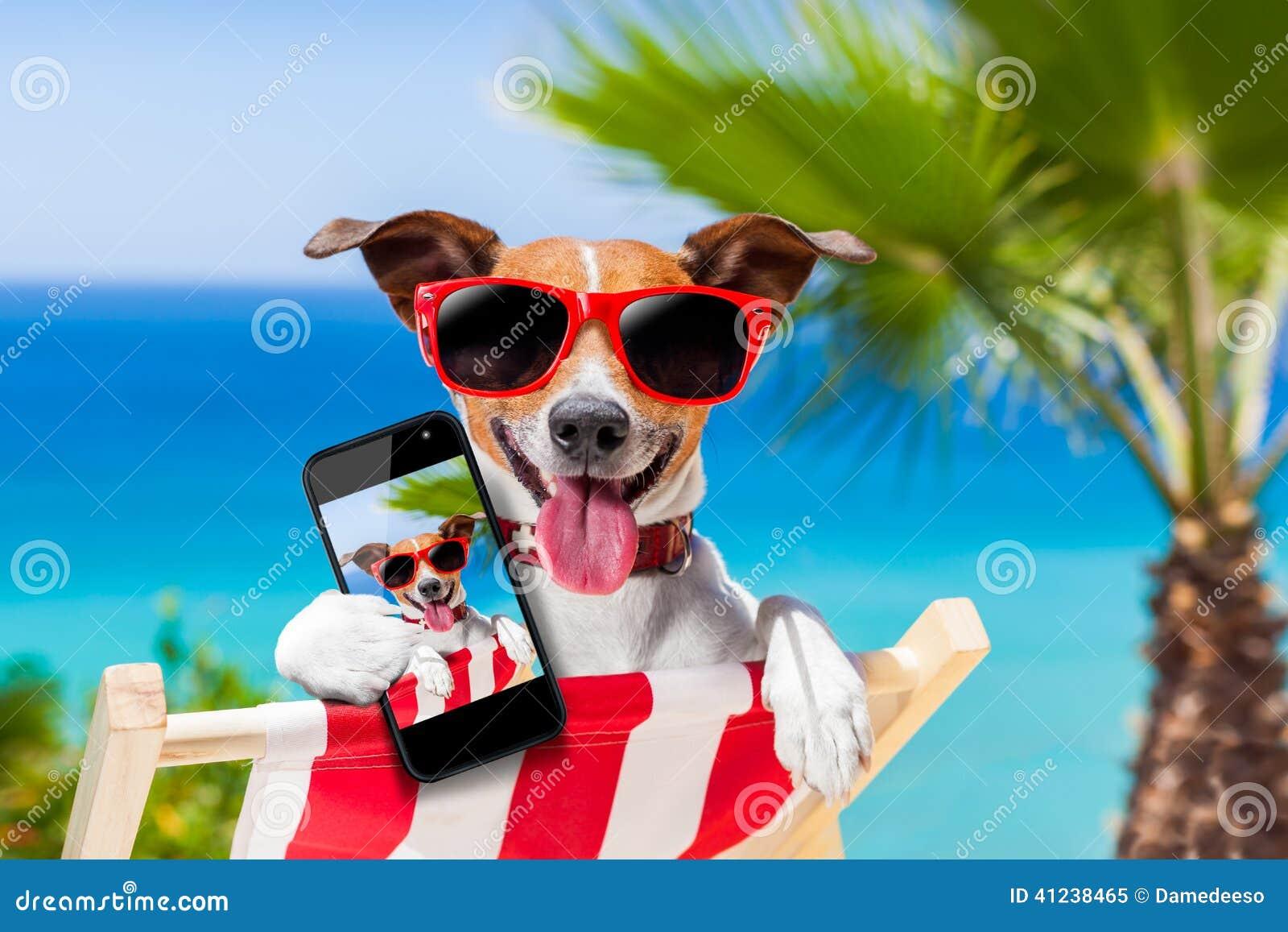 Chien de selfie d été