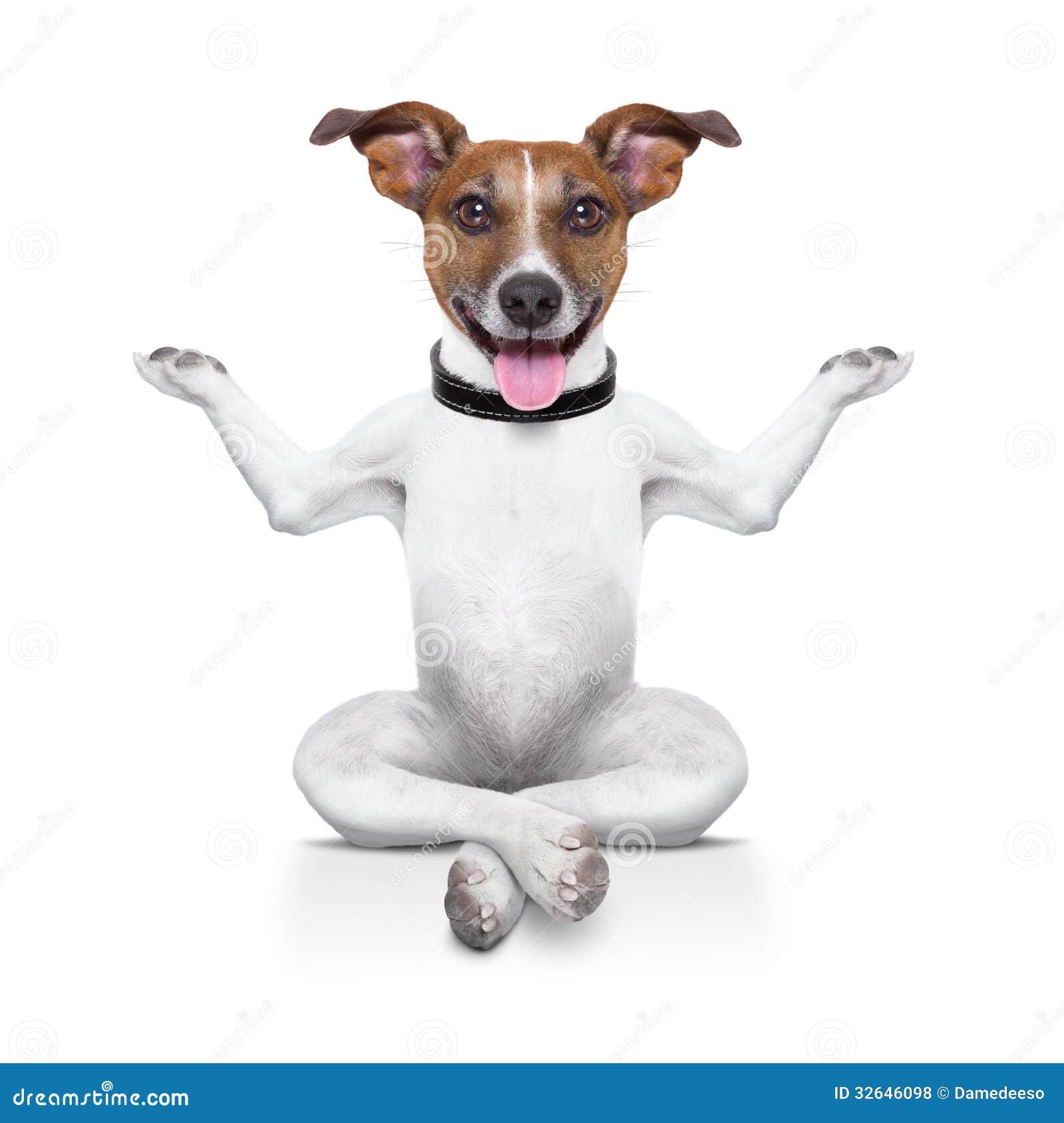 Chien de yoga