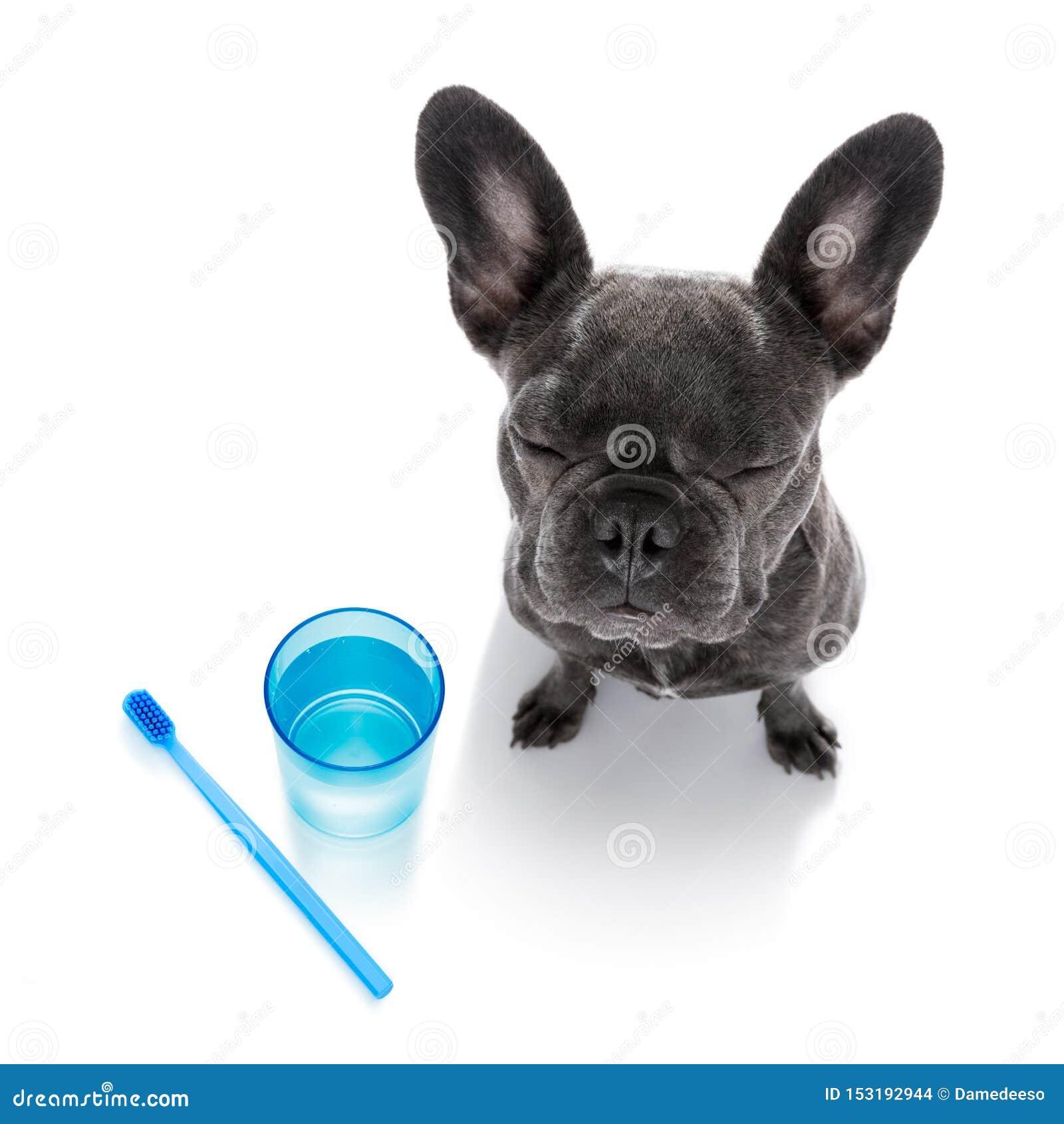 Chien dentaire de brosse ? dents