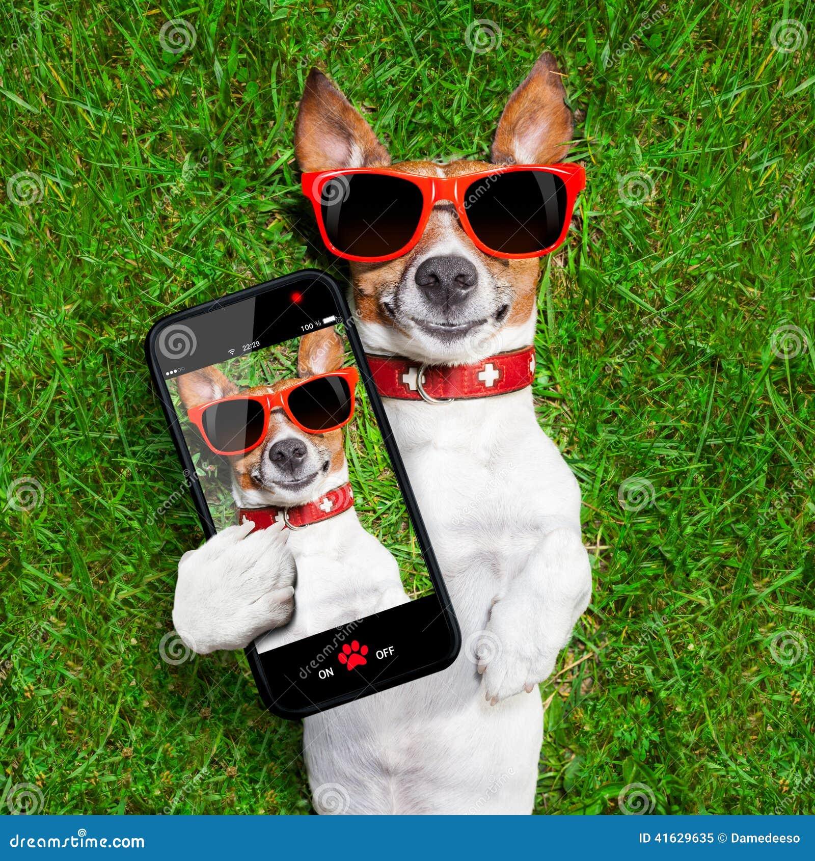 chien dr le de selfie image stock image du animal t l phone 41629635. Black Bedroom Furniture Sets. Home Design Ideas