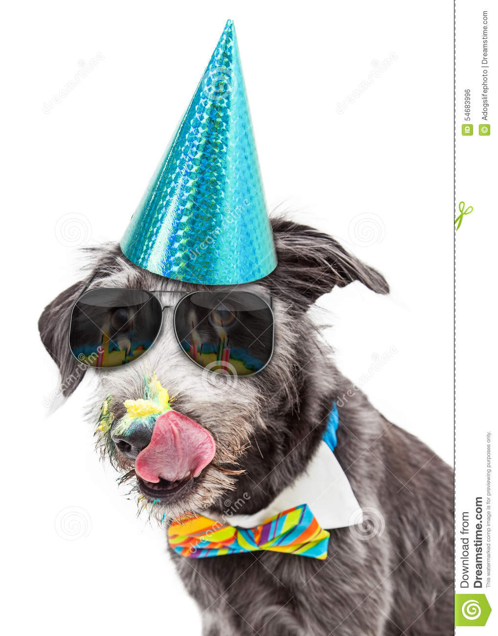 Dog Eating Birthday Cake Image
