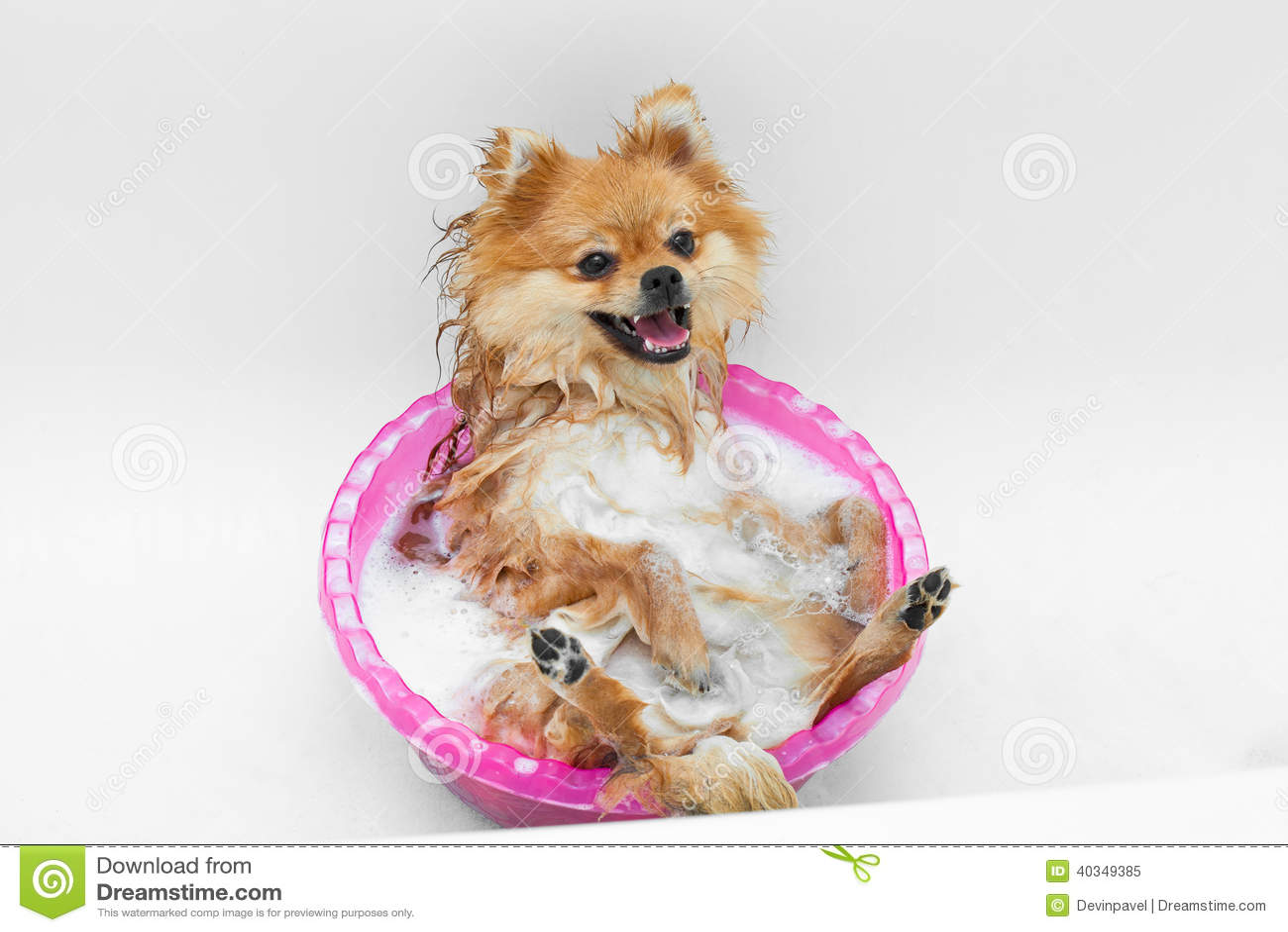 Chien dr le prenant un bain photo stock image 40349385 for Pipi de chien sur carrelage