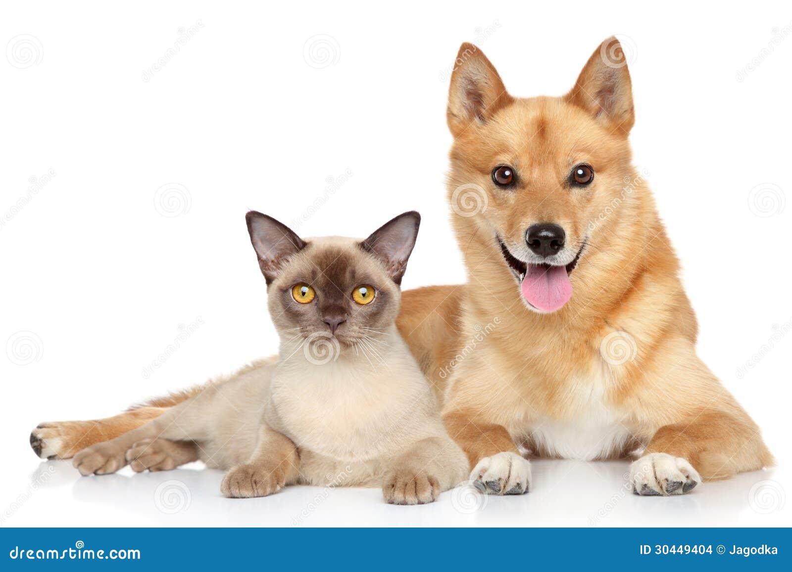 Chien et chat heureux ensemble photo stock image du - Com chien et chat ...