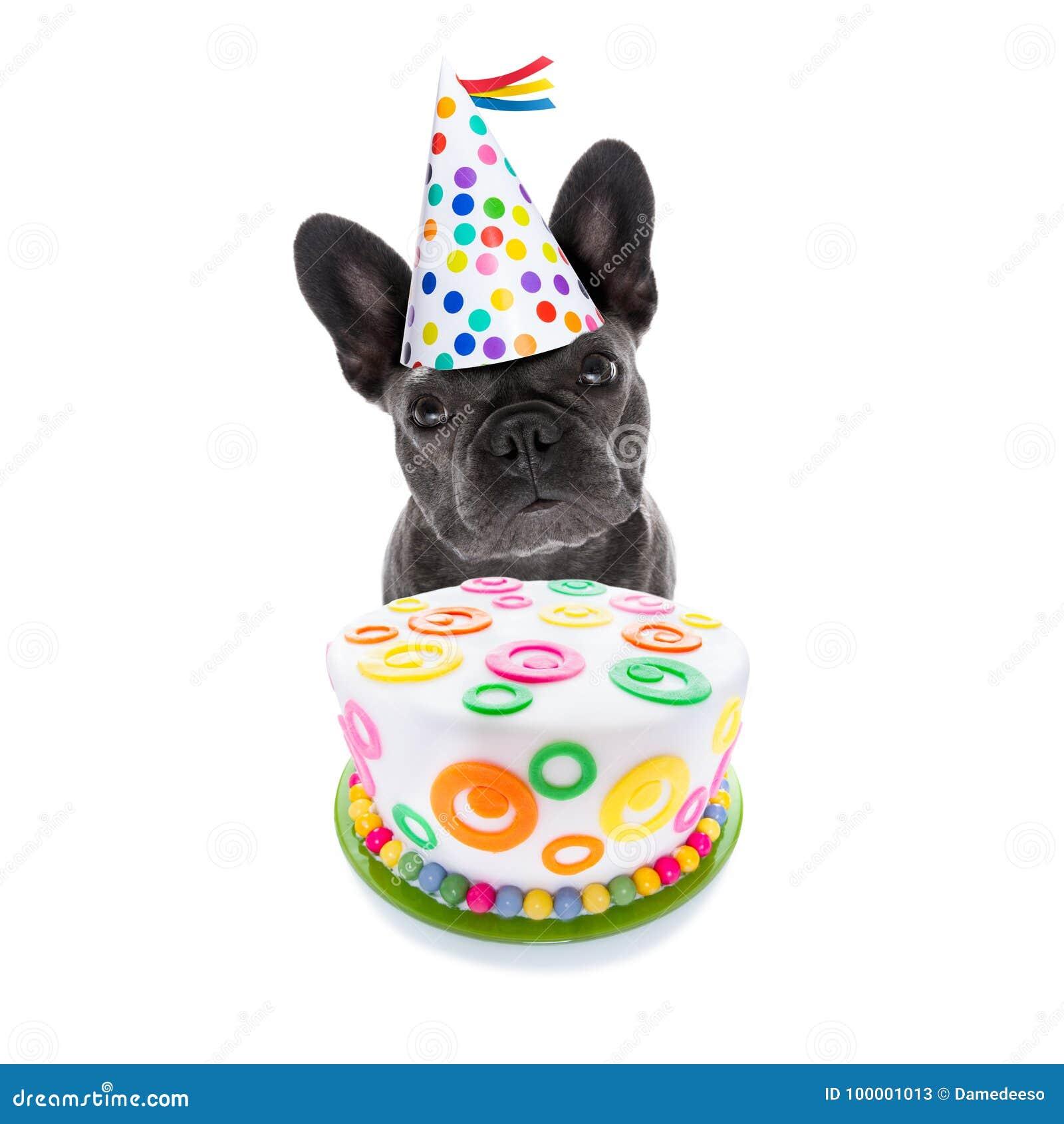 Chien et gâteau de joyeux anniversaire