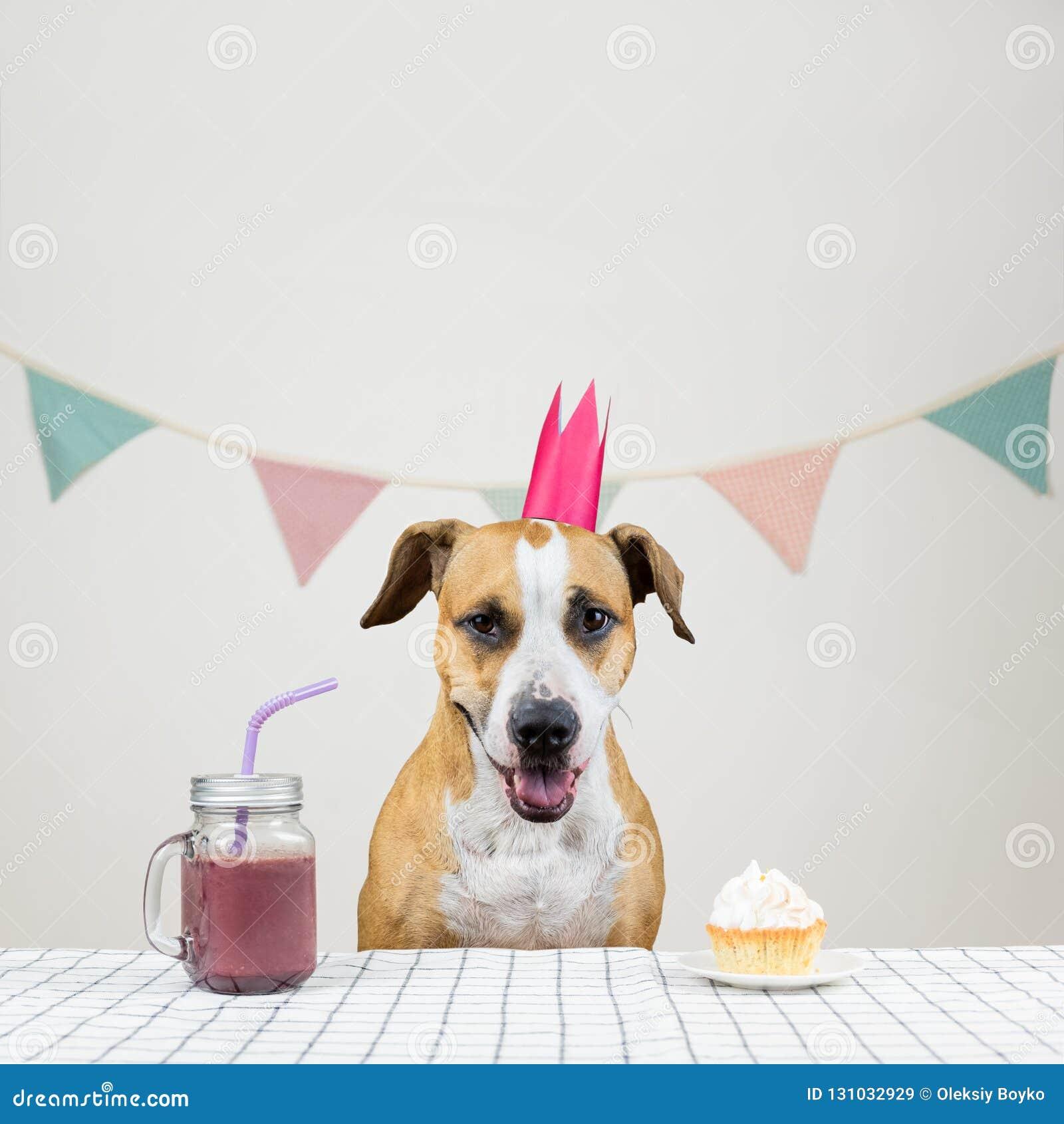 Chien Et Son Festin Danniversaire Sous La Forme Dun Gâteau De Fête