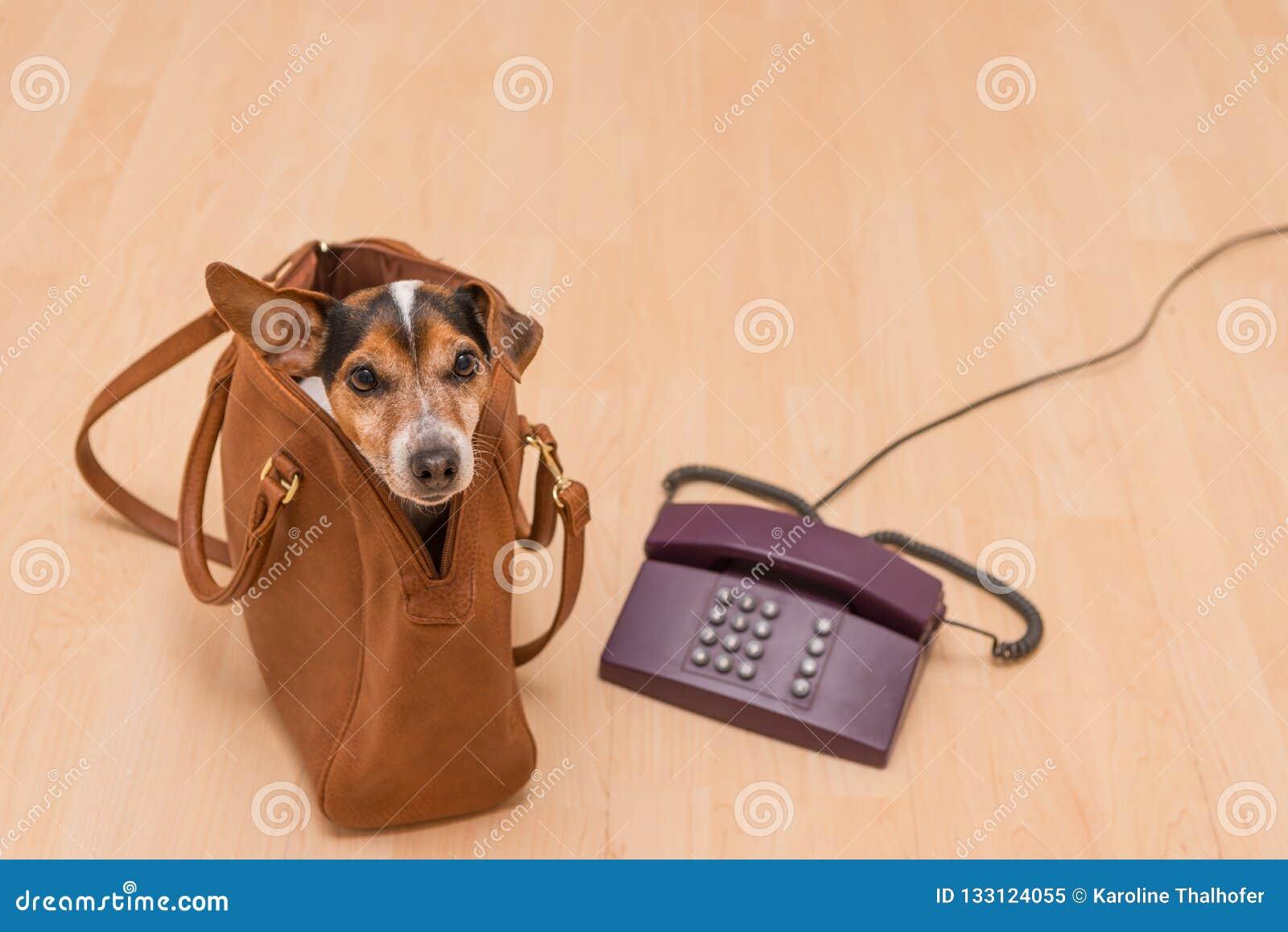 Chien et téléphone prêts pour la communication