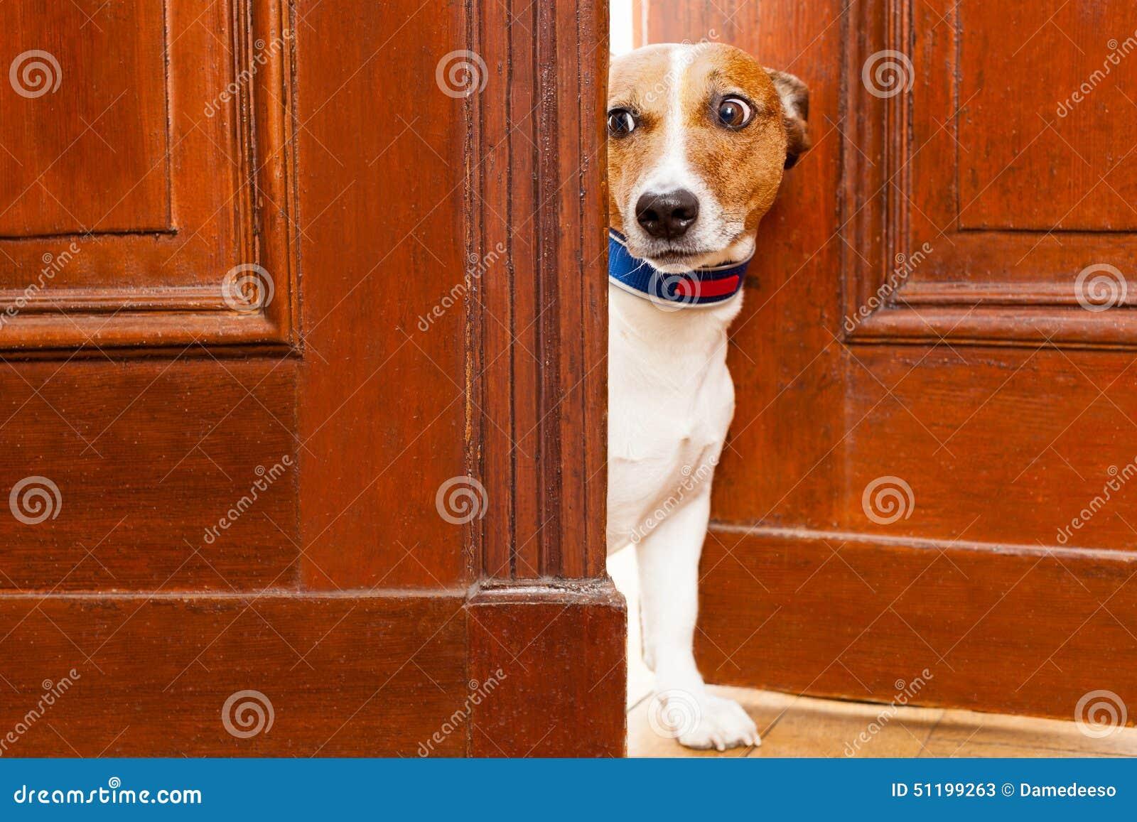 Chien fouineur à la porte
